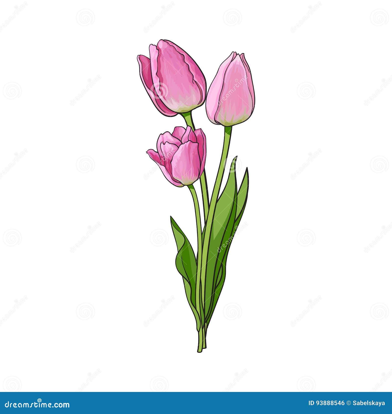 Вручите вычерченный пук цветка тюльпана 3 взглядов со стороны розового