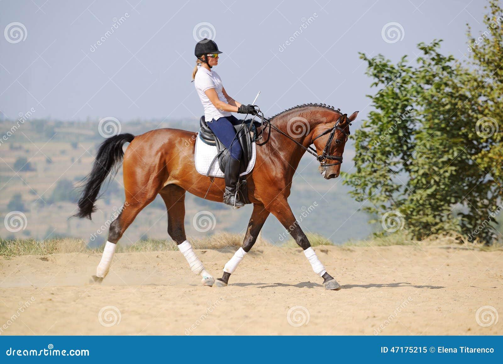 Всадник на лошади dressage залива, идя трот