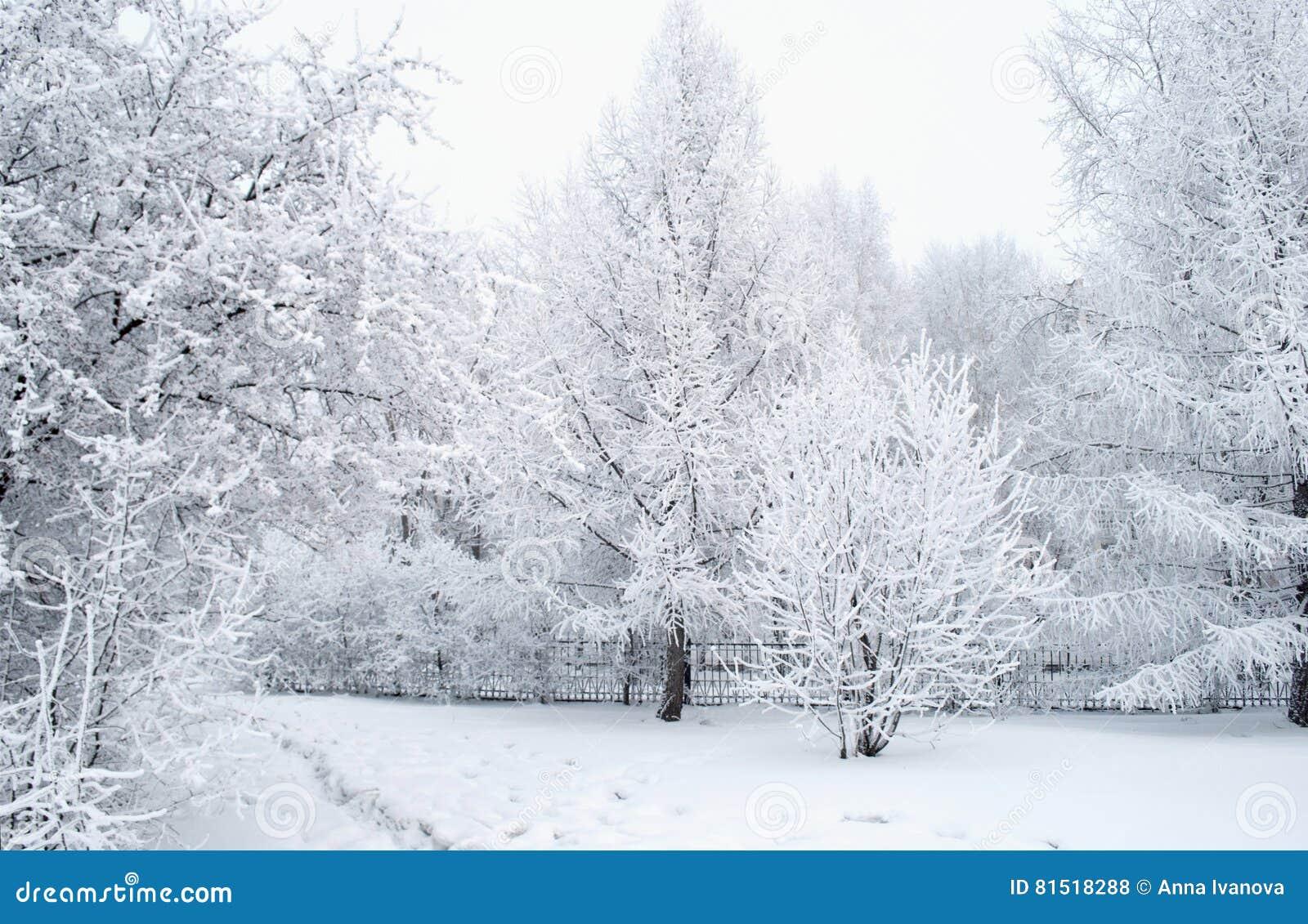 Все покрыто с снегом Фантастичные рождественские елки и праздничное настроение