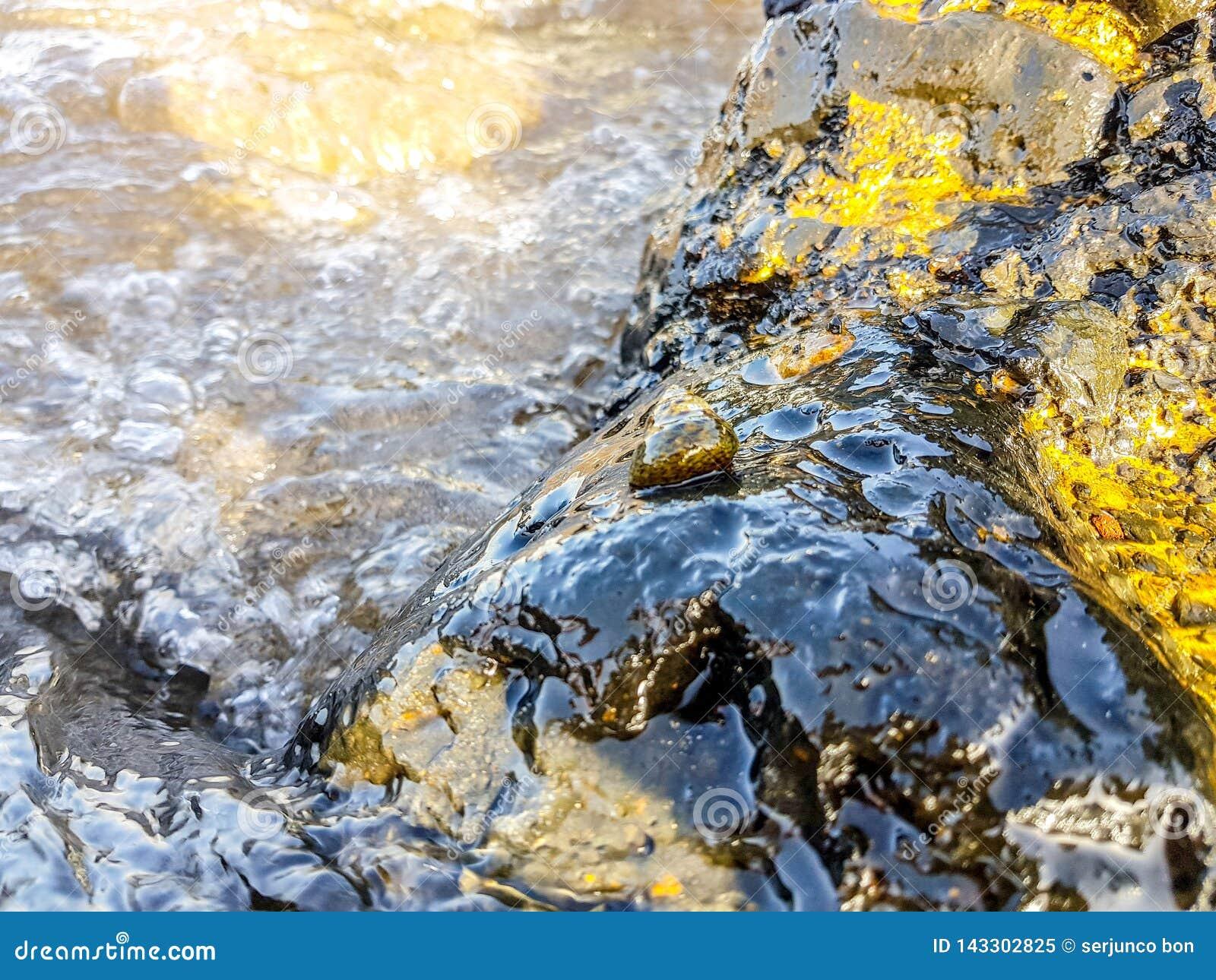 вулканические породы на береге моря влажного волнами и с улиткой моря в середине Новым переконструированная отпуском банкнота дол