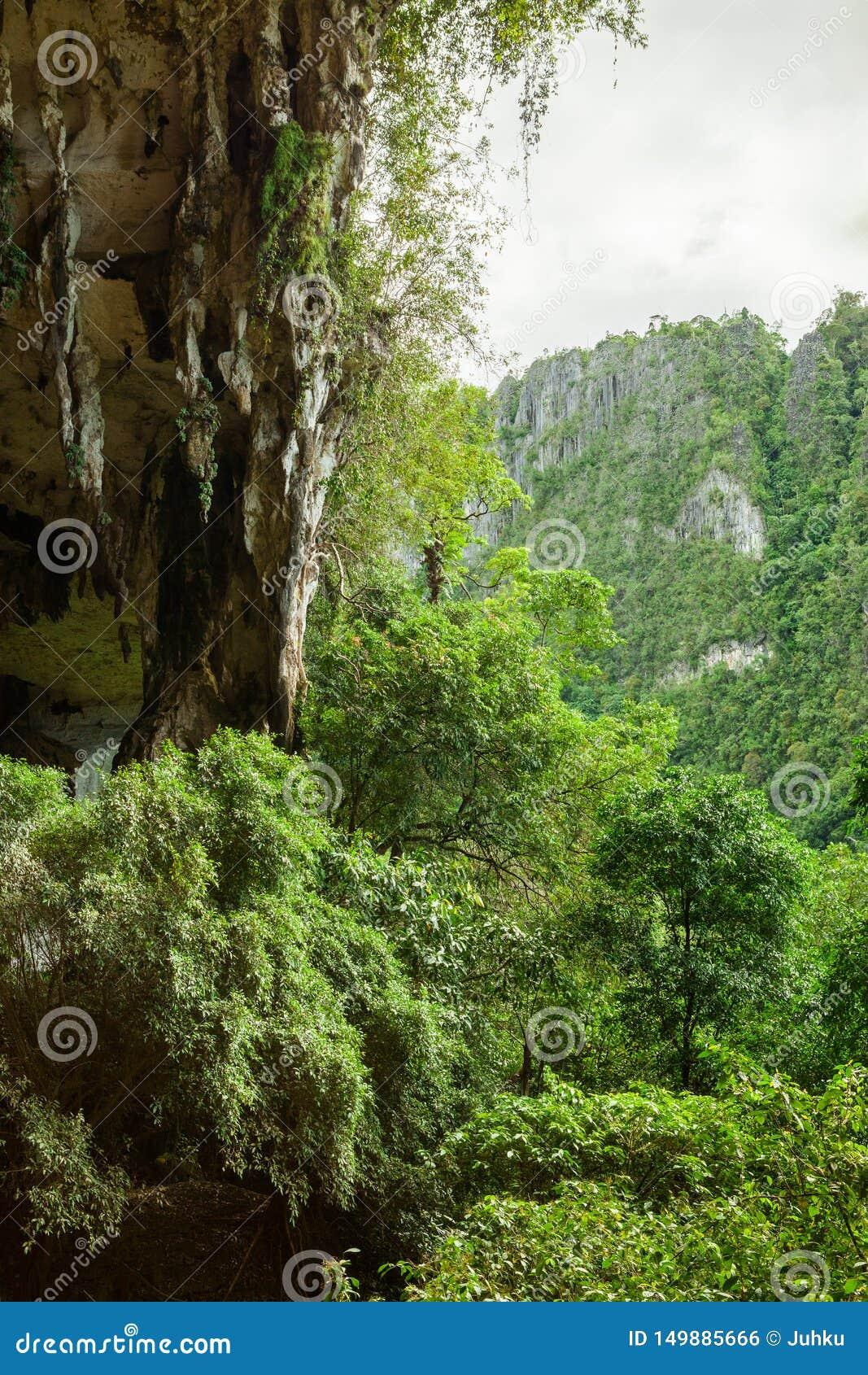 Туристы обнаружили в лесу невидимую пещеру | 1689x1067