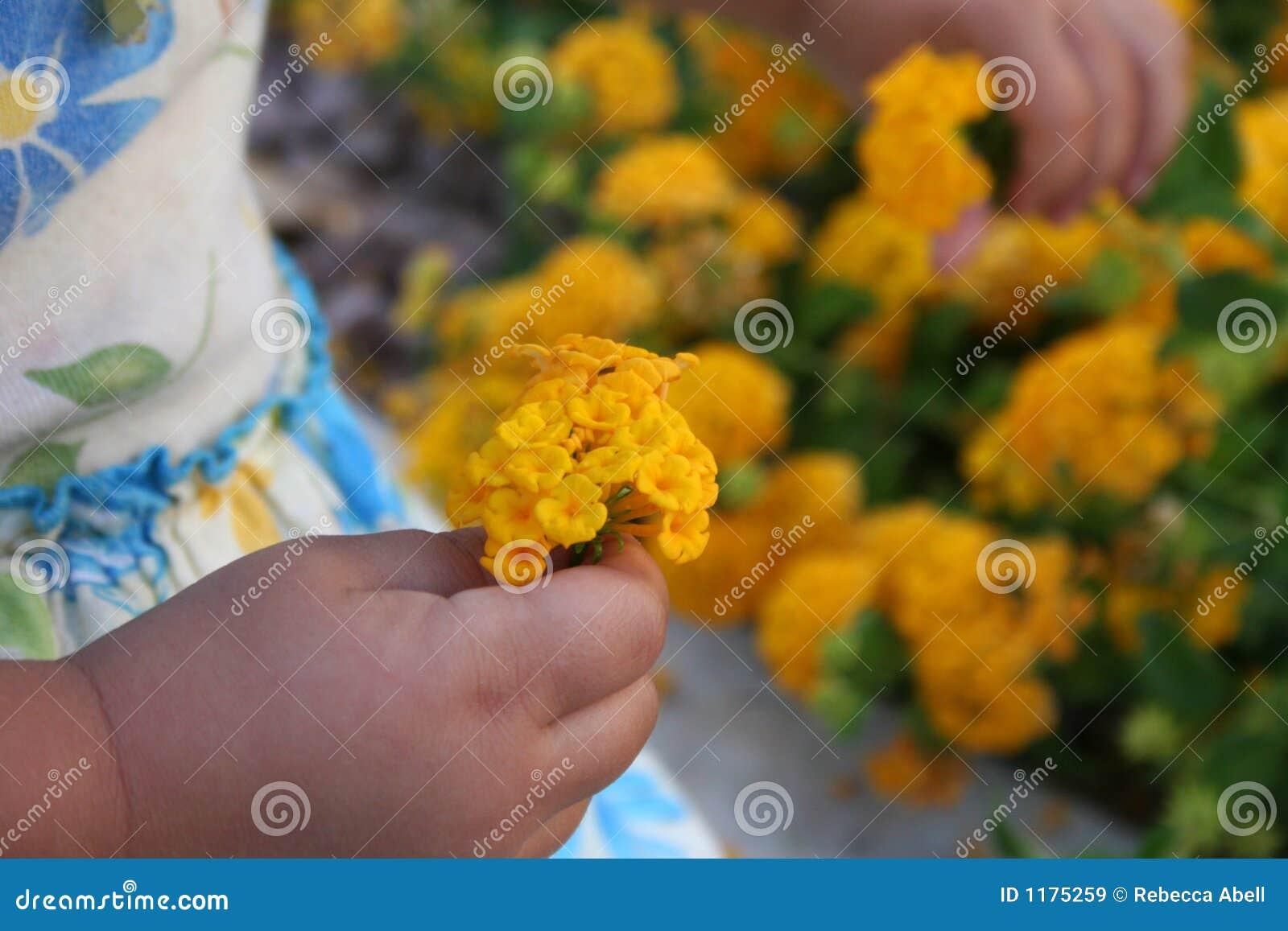 выбирать цветков