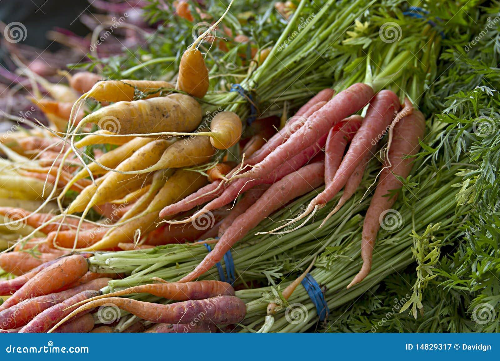 выбранная свежая морковей