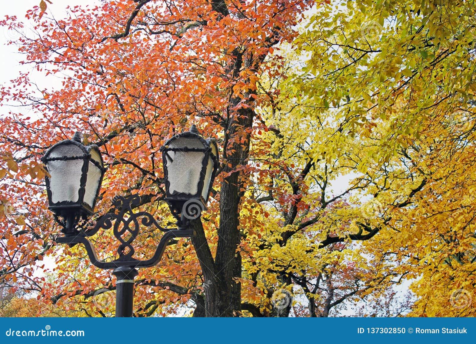 Выкованные фонарики в парке на предпосылке деревьев осени