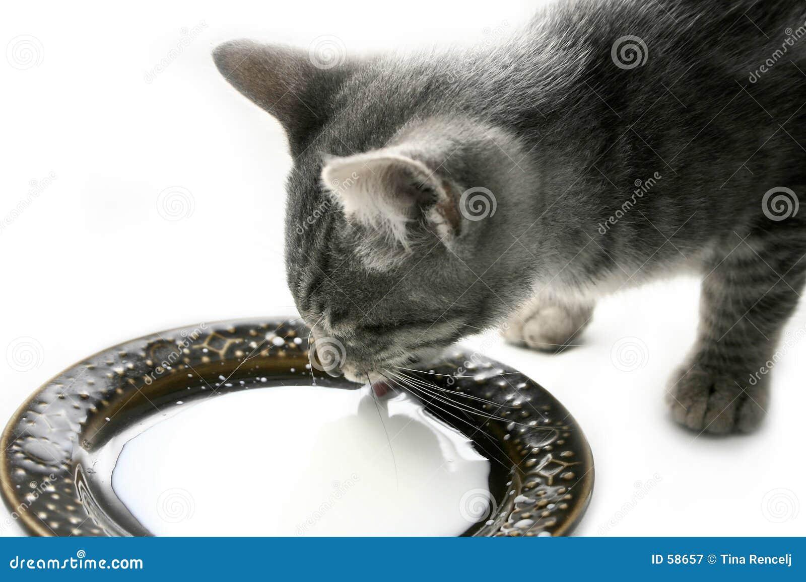 выпивая котенок