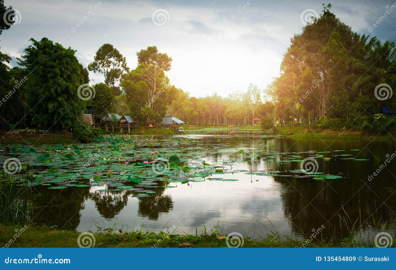 Выравнивать взгляд в сельской местности Таиланда