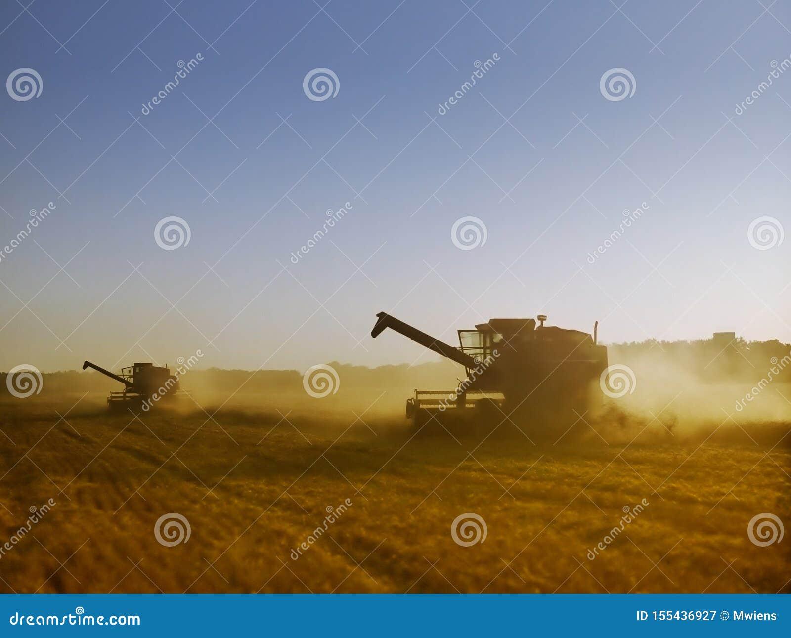 Выравнивать свет на комбайнах жать зрелую золотую пшеницу