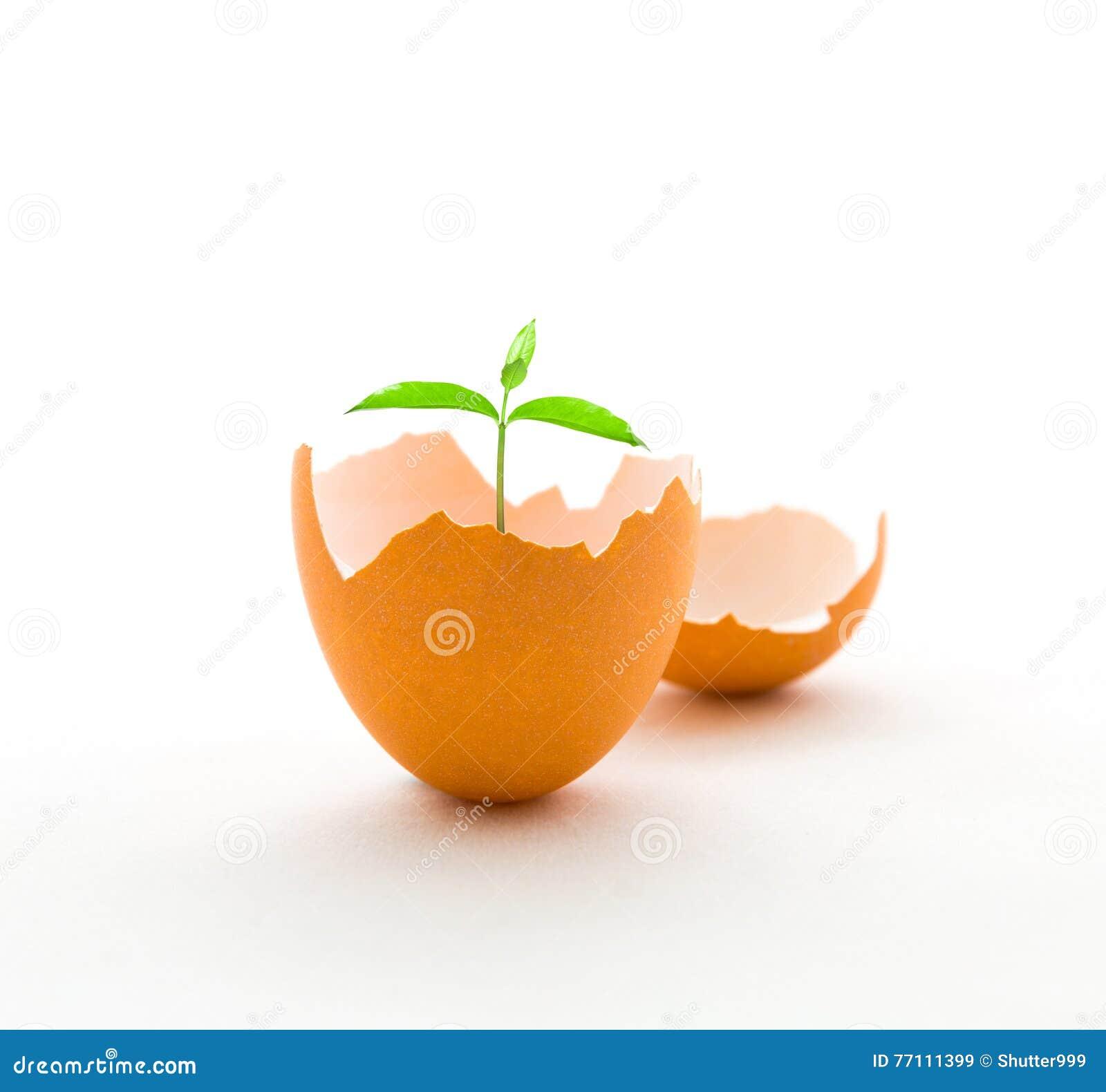Вырастите дерево в eggshell, концепции роста