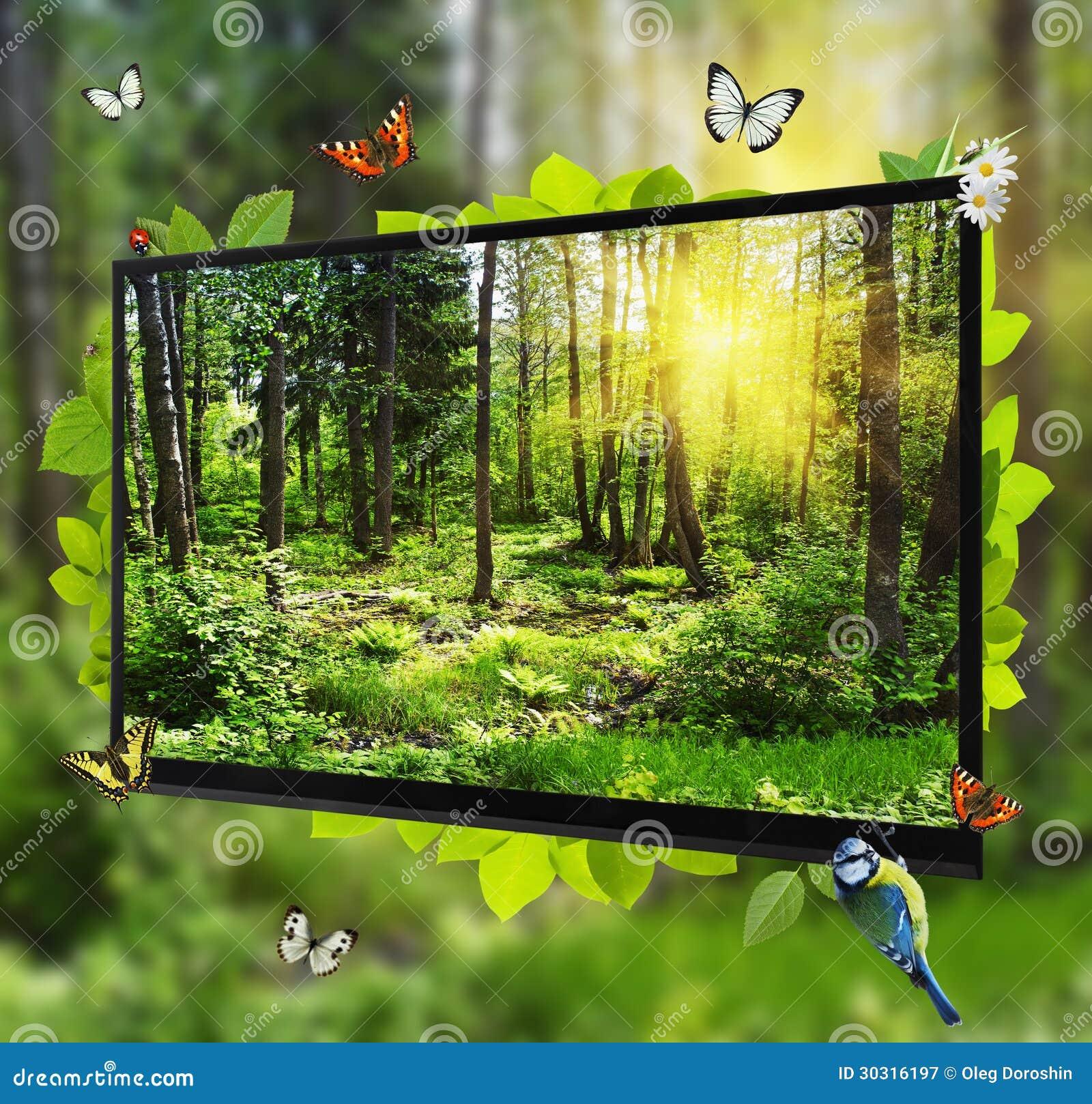 Выставки жизни пущи на экране TV