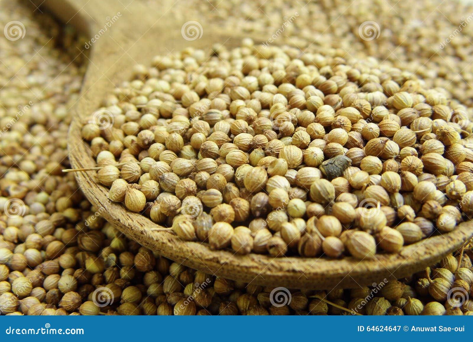 Высушенное семя кориандра