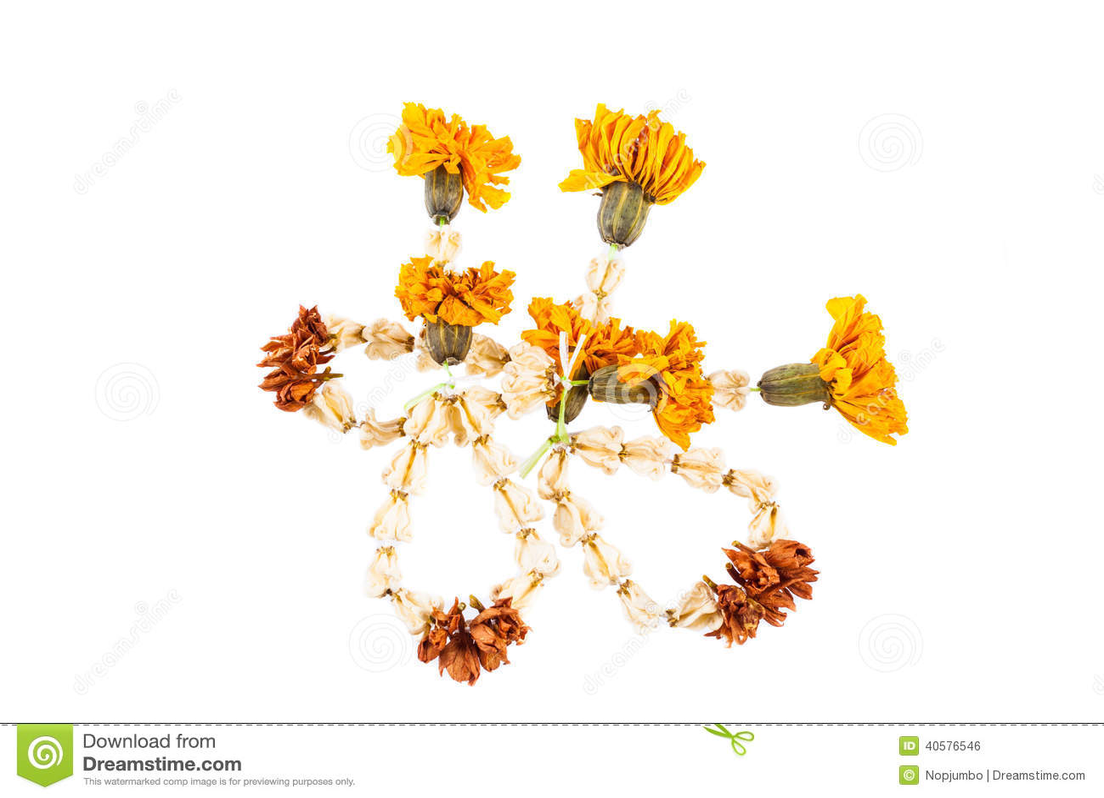 Высушенные цветки гирлянды