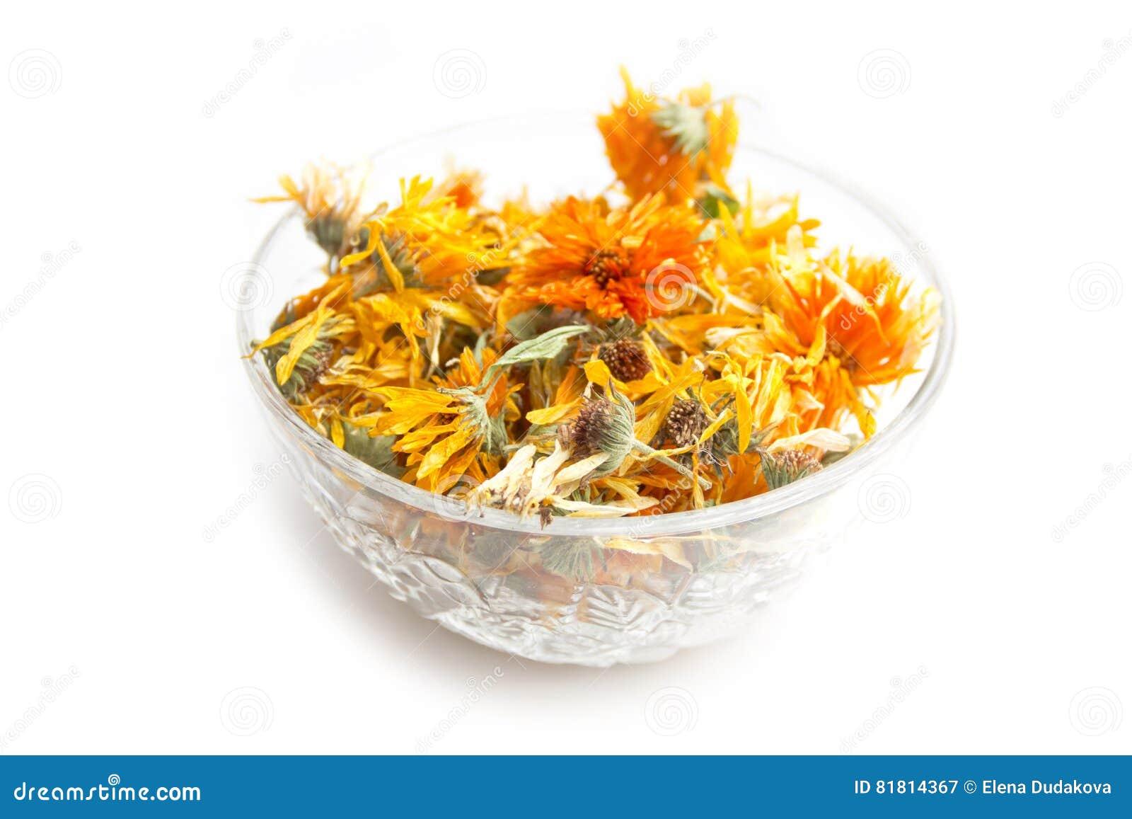 Высушенные цветки calendula на белой предпосылке