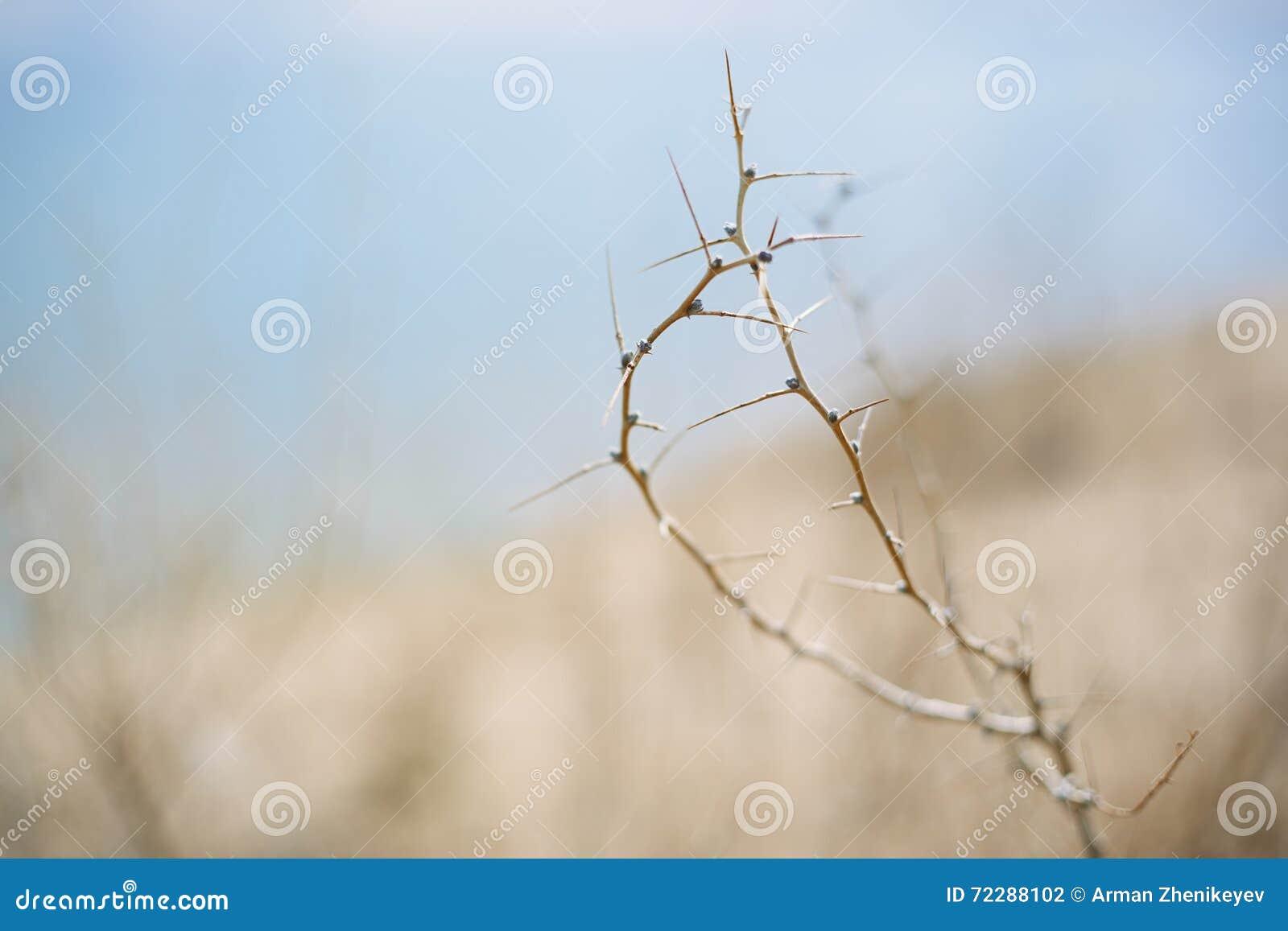 Download Высушенный заусенец в пустыне Стоковое Фото - изображение насчитывающей concept, лето: 72288102