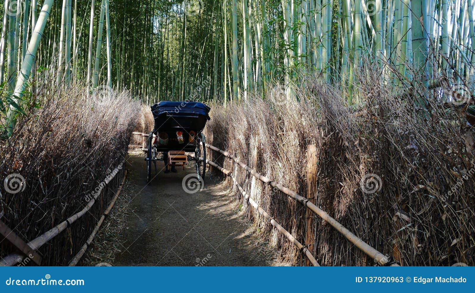 Вытягиванная рикша в бамбуковой роще
