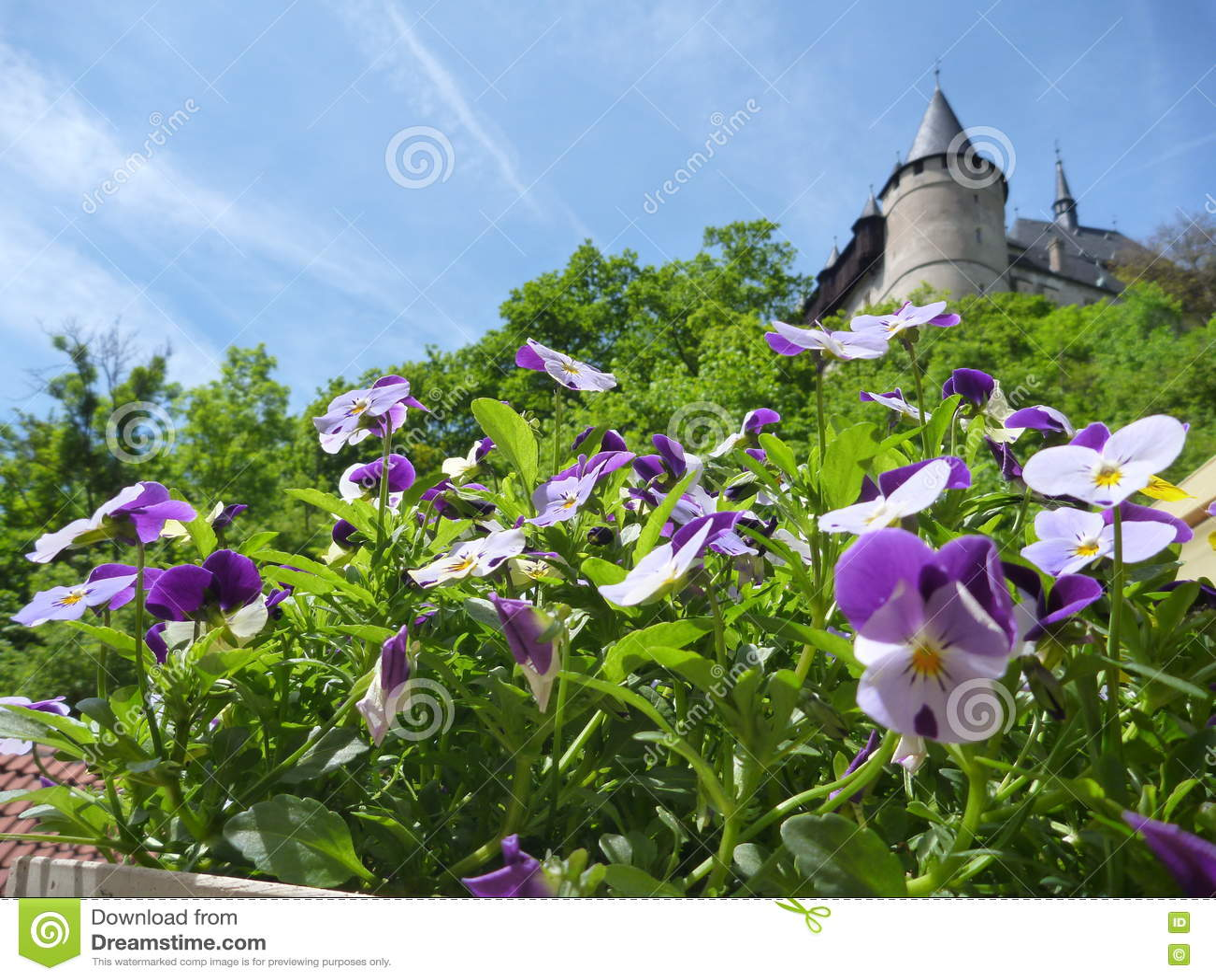 В горшке красочные цветки с замком Karlstejn возвышаются в предпосылке