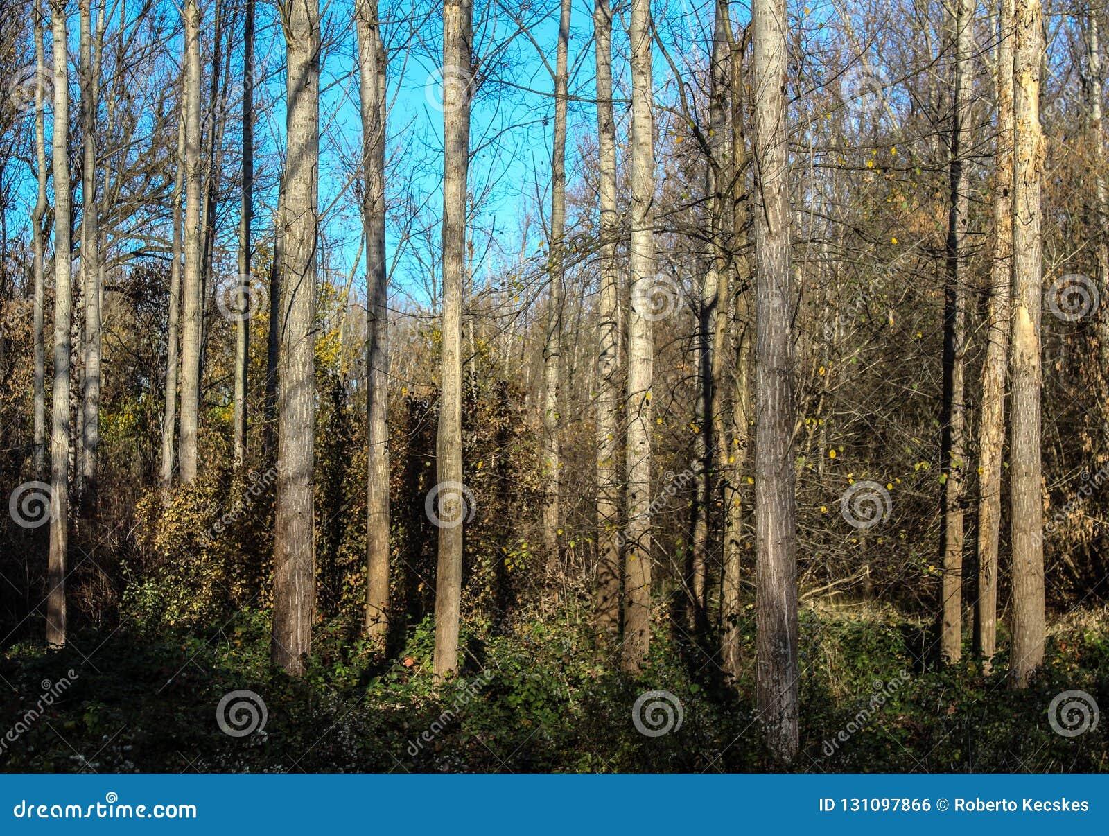 В древесинах
