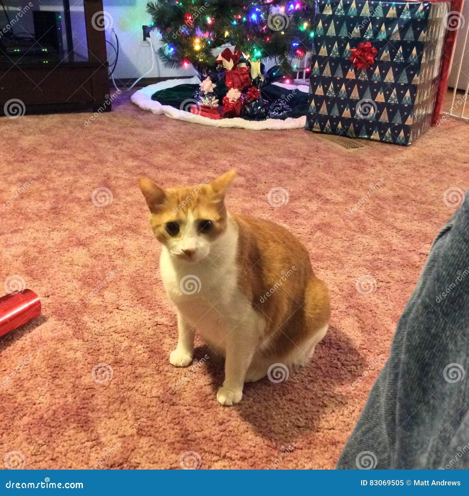 влияние голубого прибора кота камеры цифровое формирует радиацию фото модели изображения жары ультракрасную делая не реальное уса