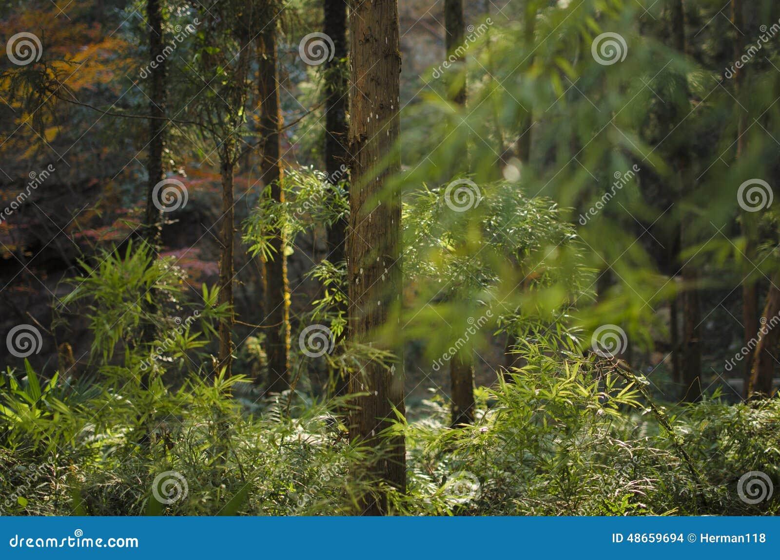 В полдень, древесины
