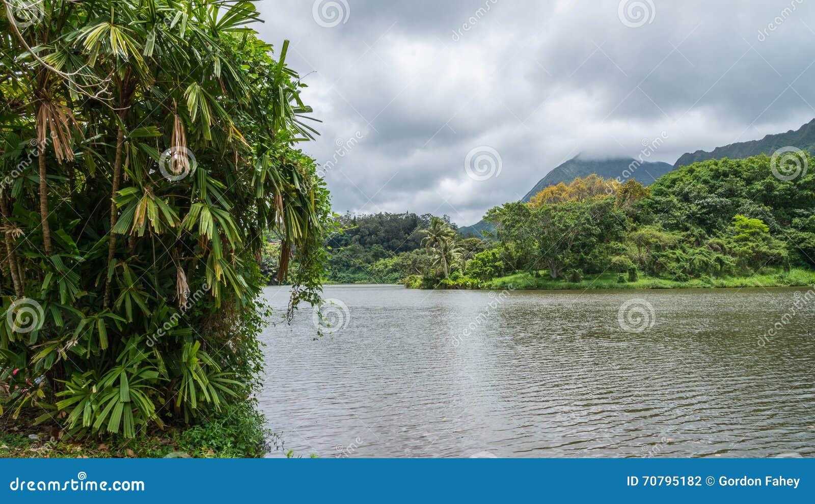 Гаваиский дождевой лес в Koolaus