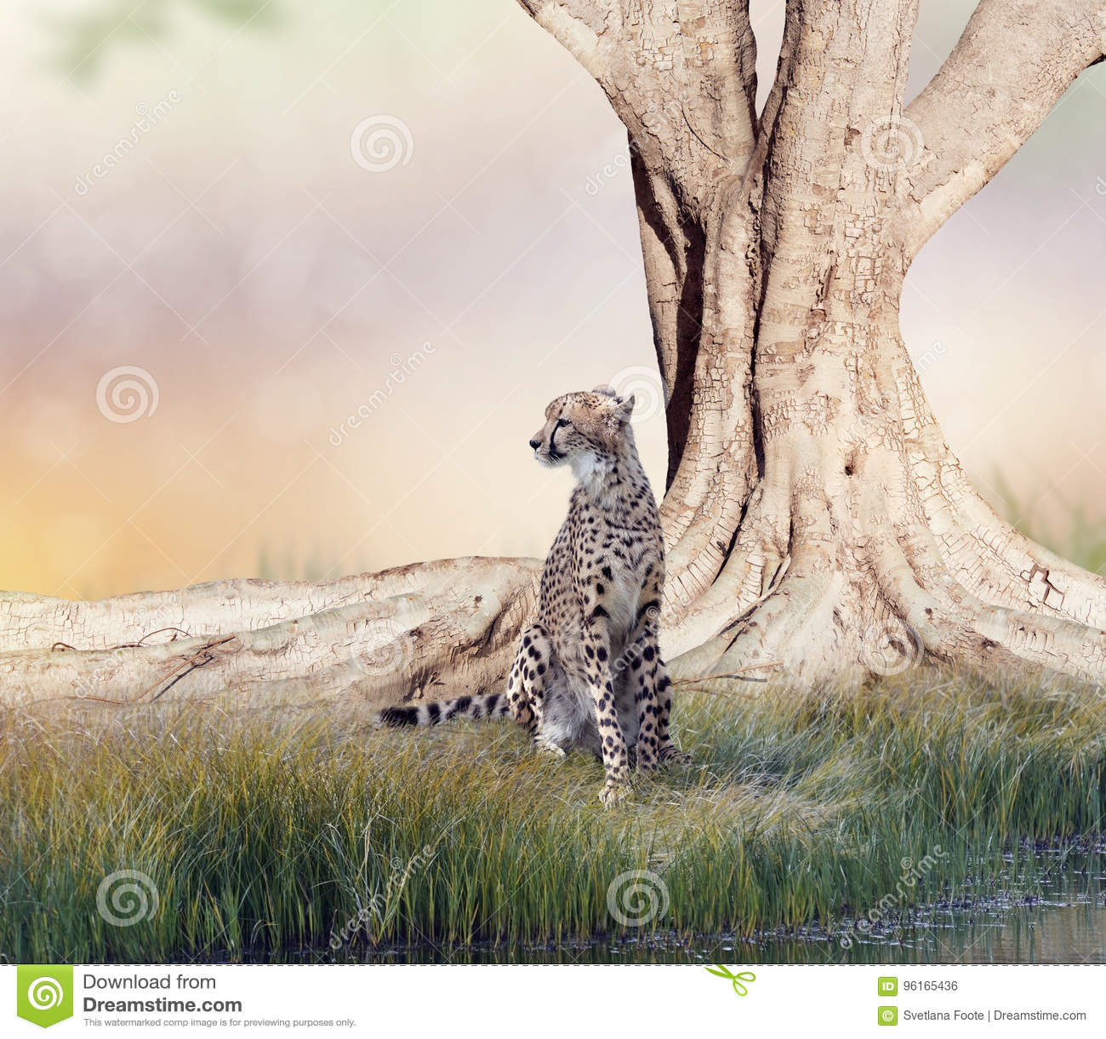 Гепард отдыхая около большого дерева