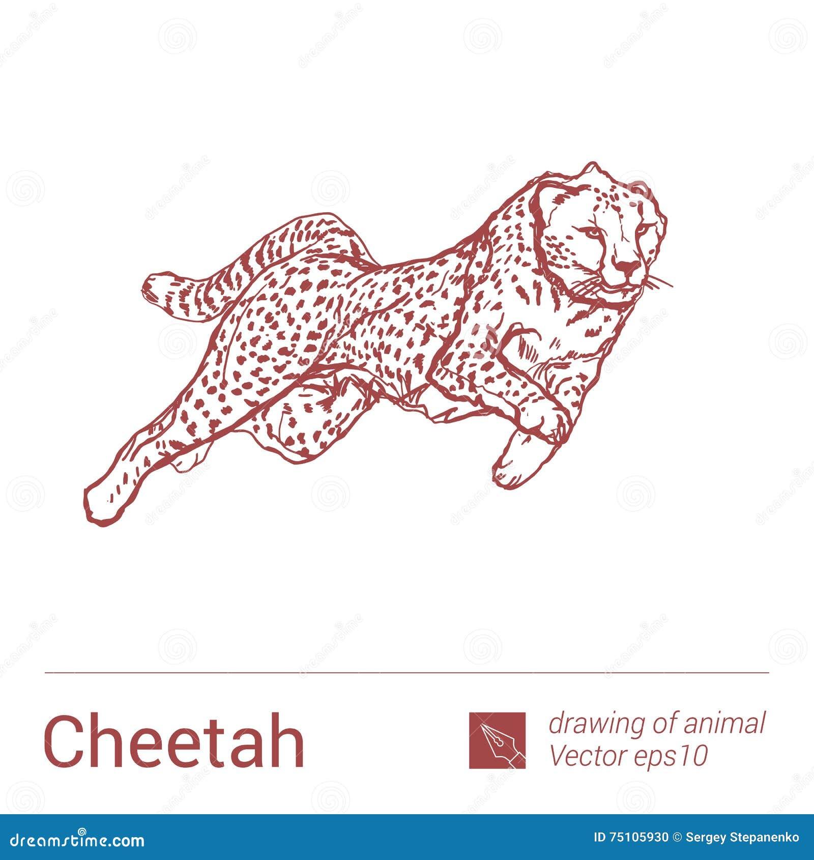 Книга как рисовать животных скачать