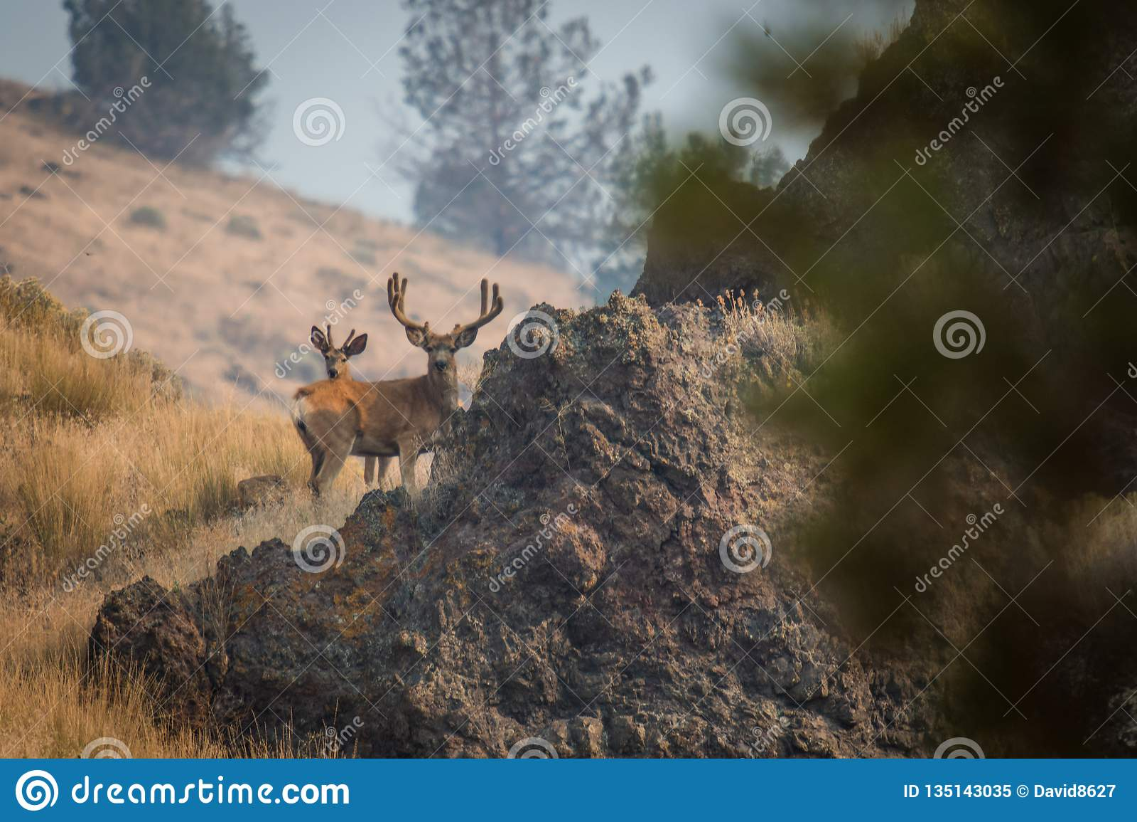 Гигантский самец оленя на холме