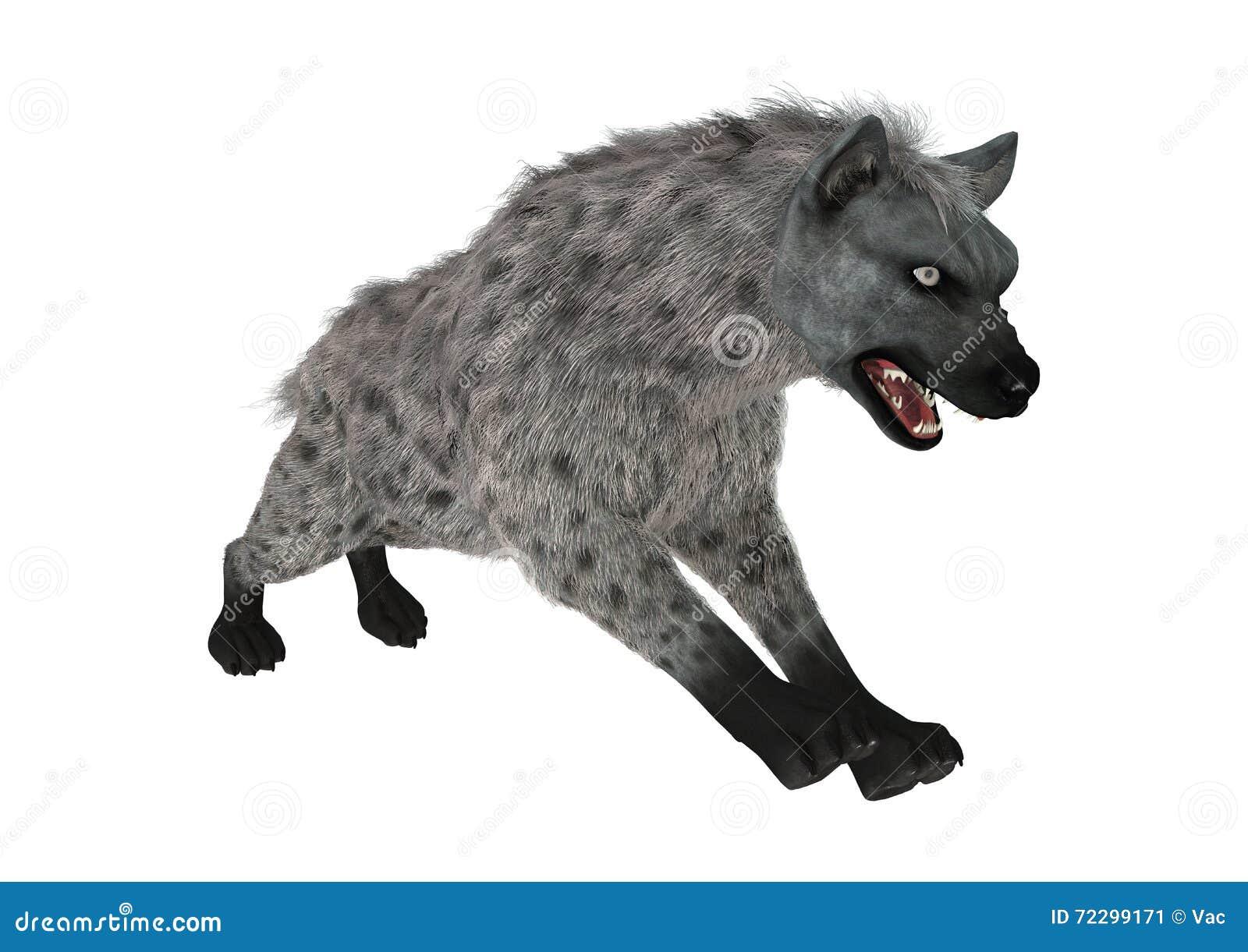 Download гиена перевода 3D на белизне Иллюстрация штока - иллюстрации насчитывающей приложения, звероловство: 72299171