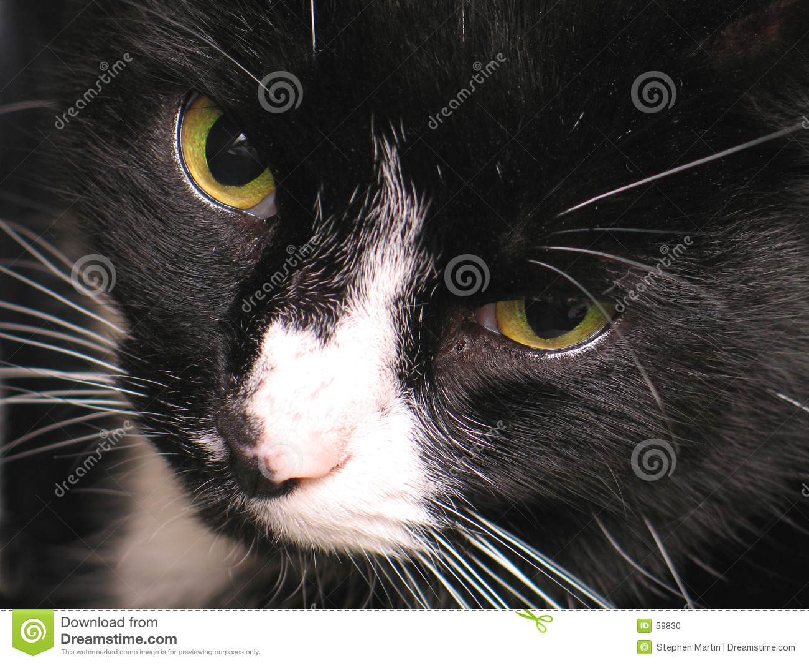 глаза кота s