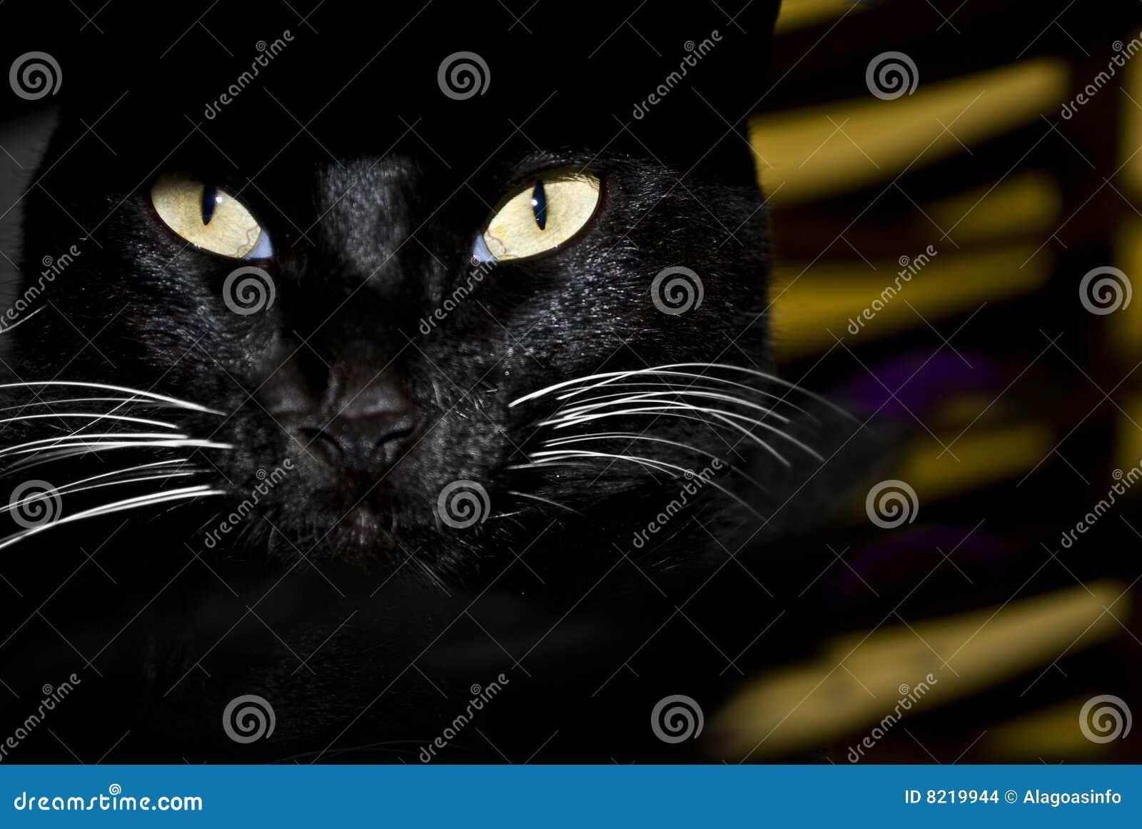 глаза котов
