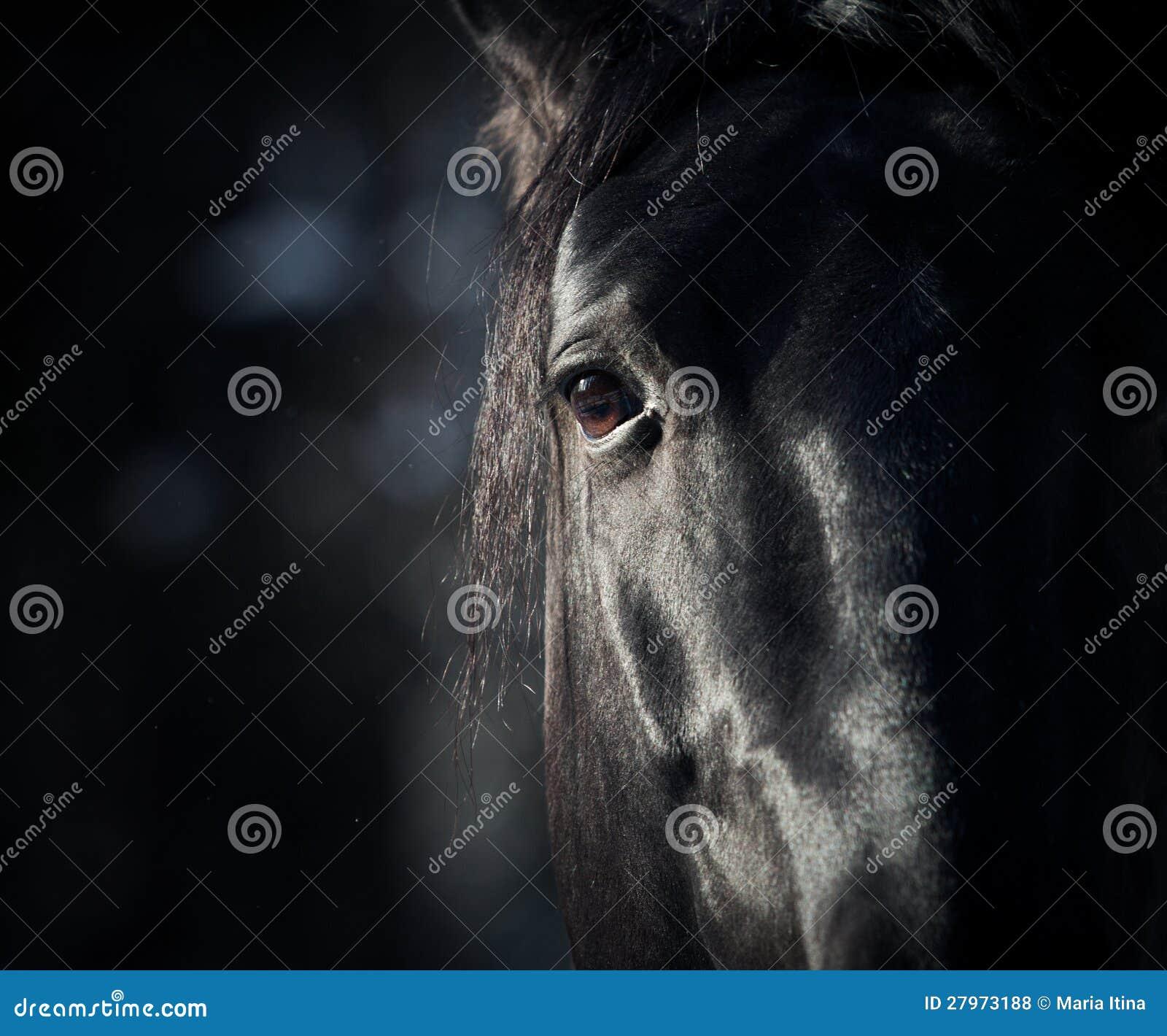 Глаз лошади в темноте