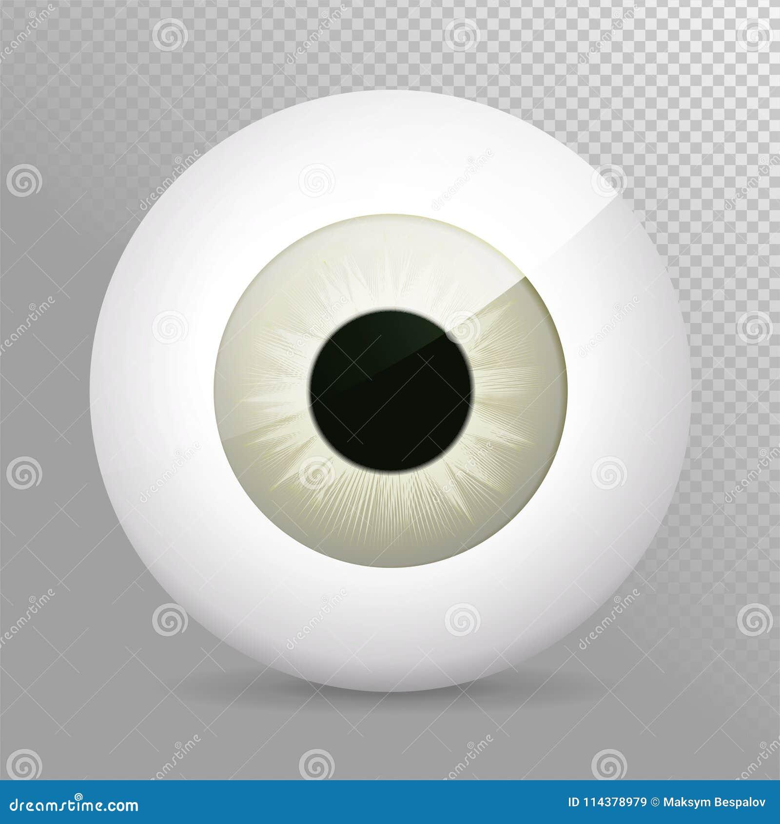 Глаз, серый Реалистическая иллюстрация вектора grayeyeball 3d Реальная человеческая сфера радужки, зрачка и глаза Значок на прозр