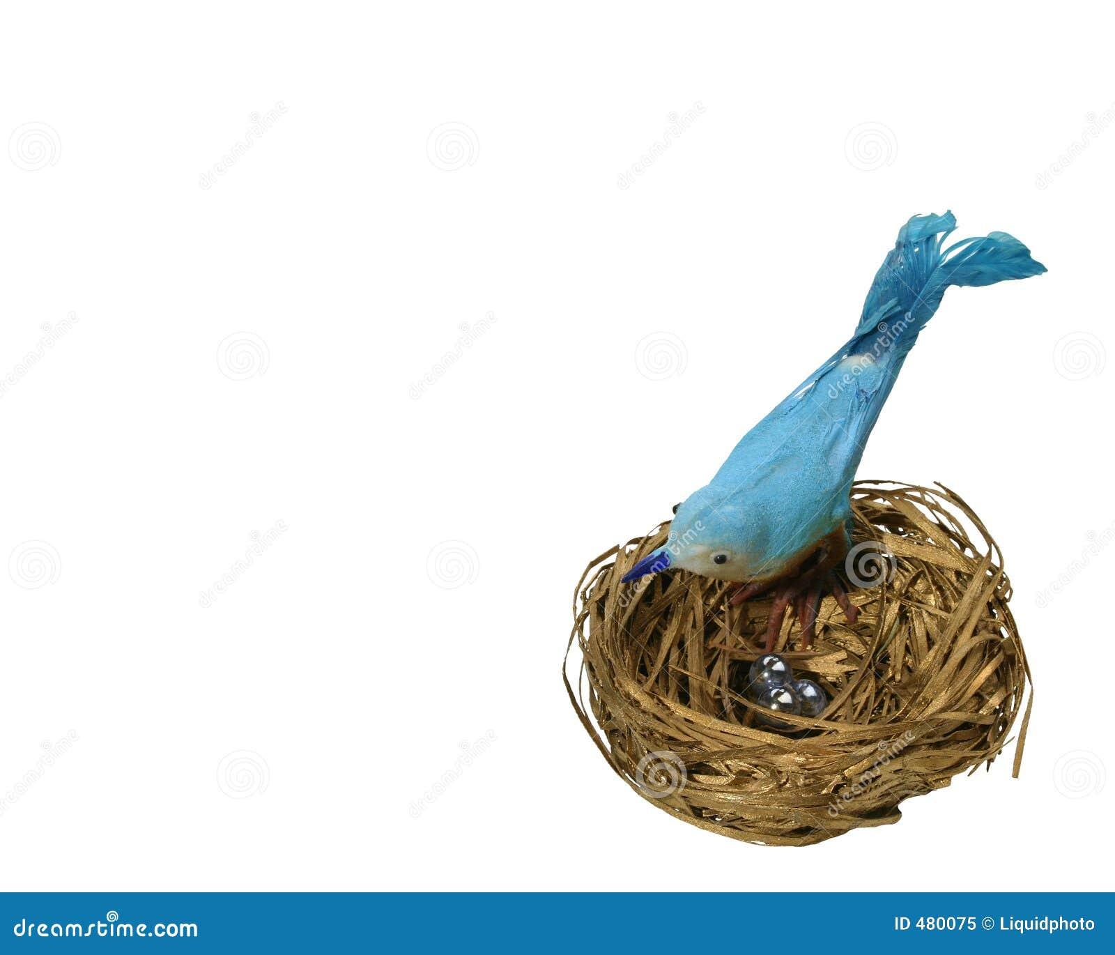 гнездй сини птицы