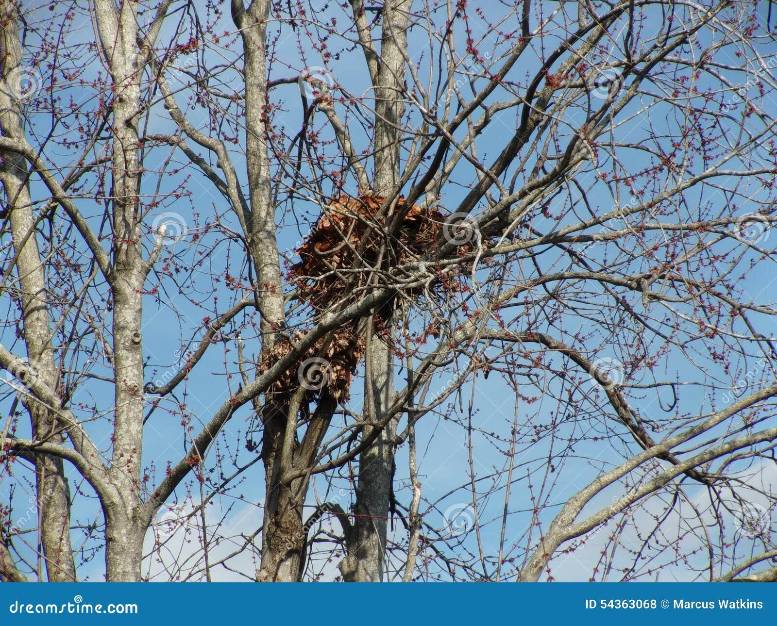 гнездо белок