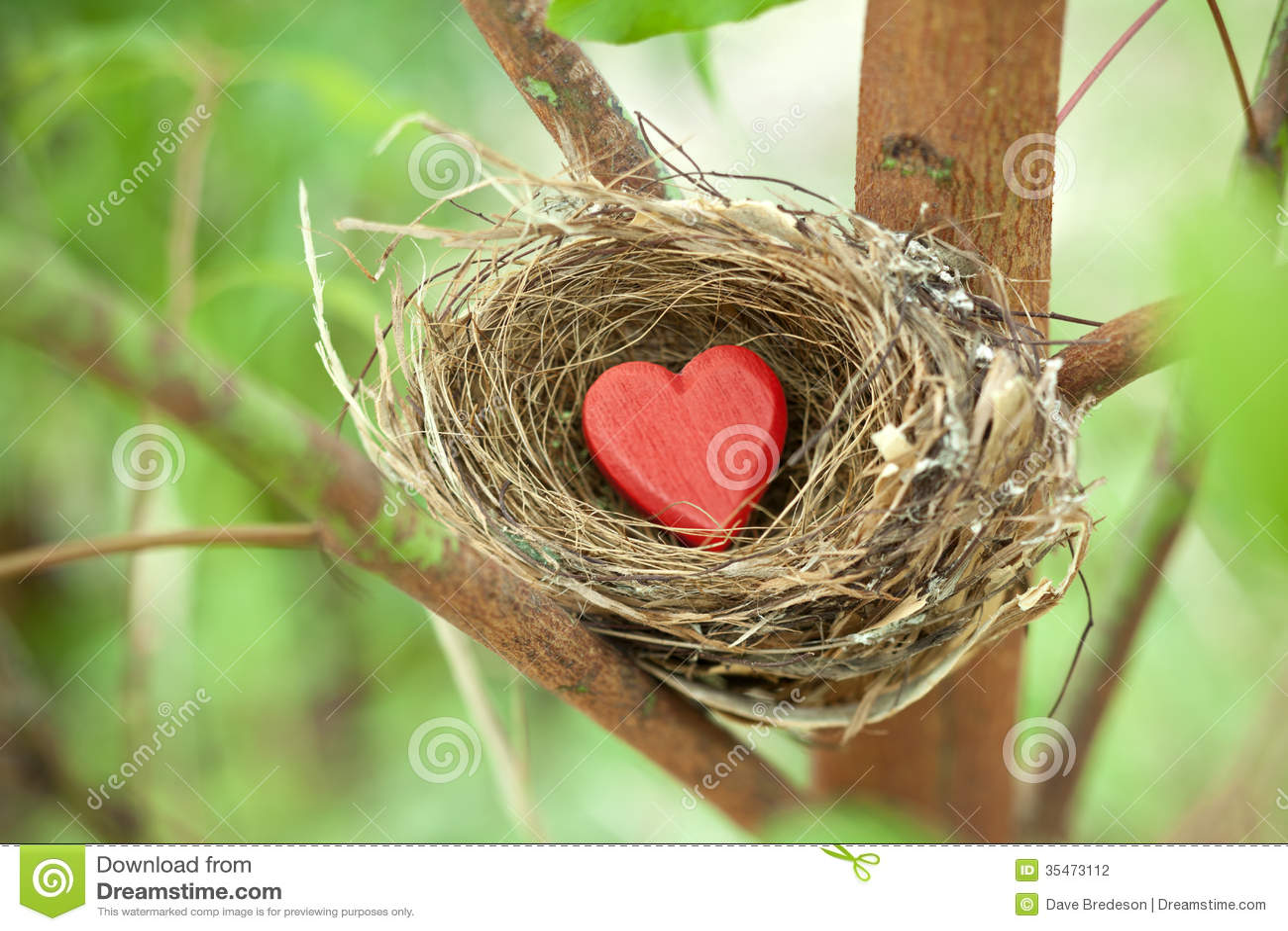 Гнездо влюбленности дерева