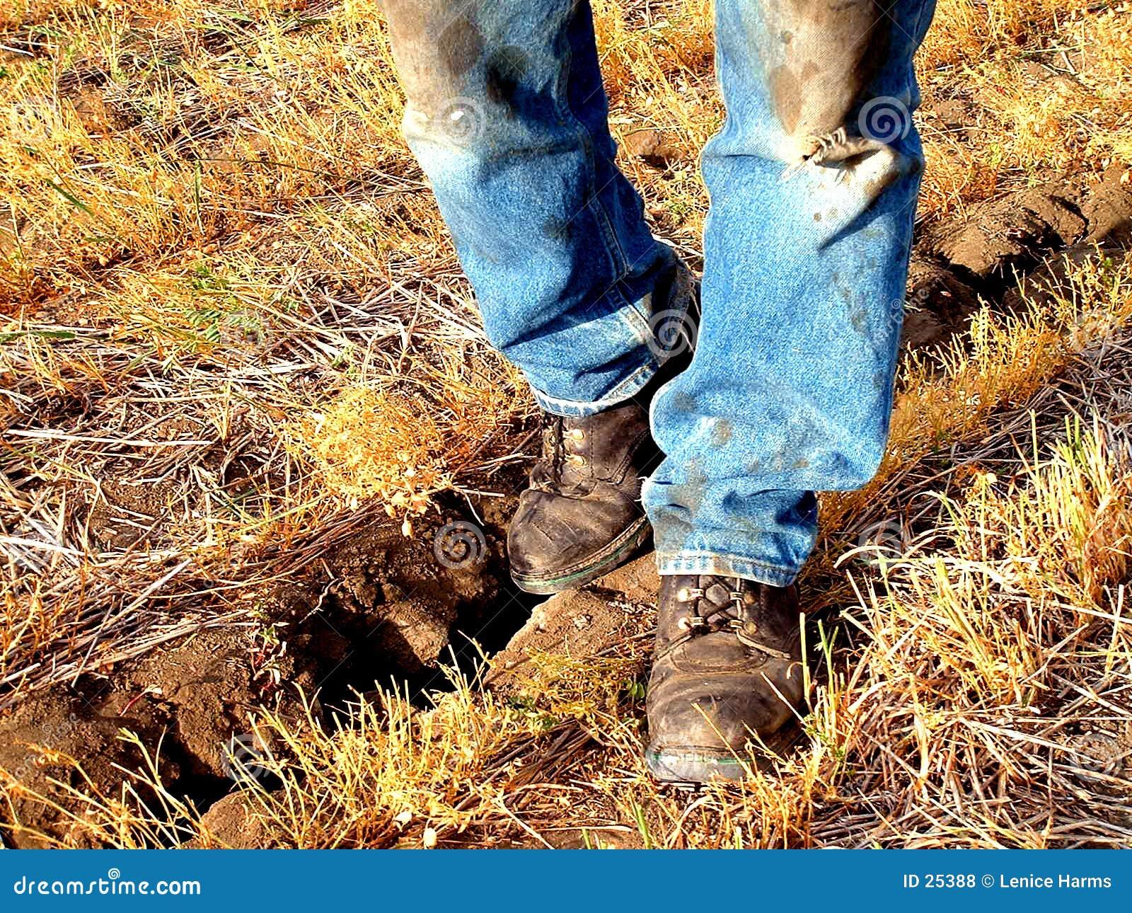 год сухой земли грубый