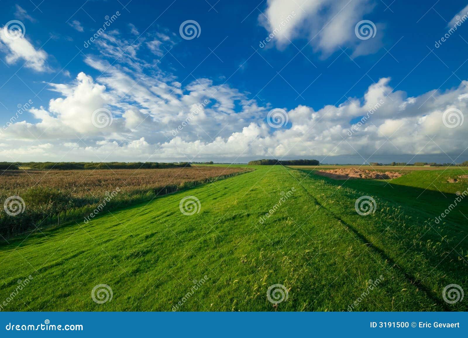 голландский ландшафт сельскохозяйствення угодье