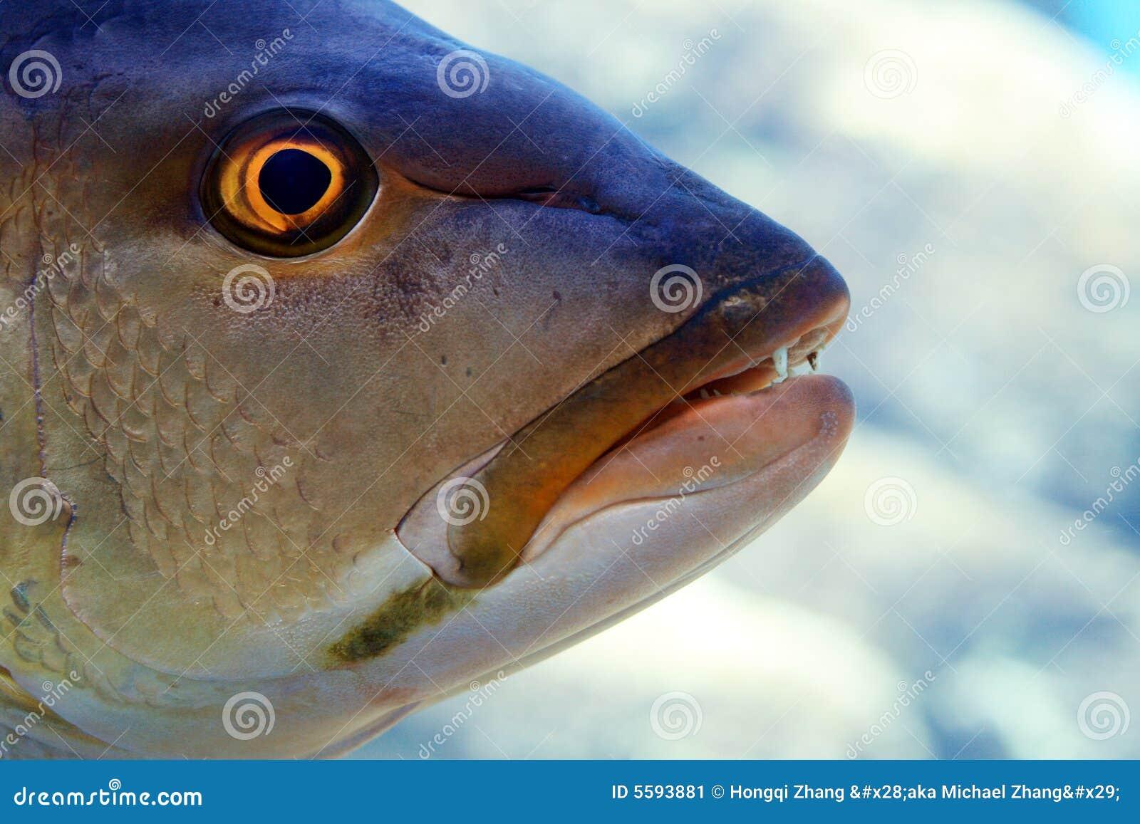 головка рыб