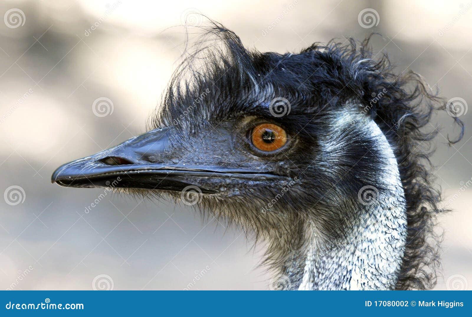 головка emu