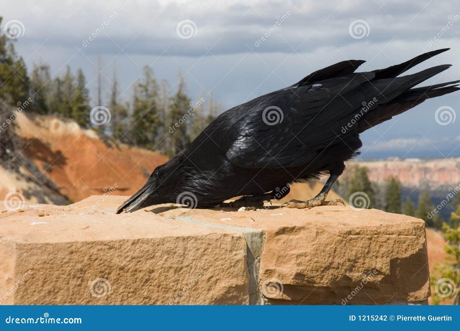 голодный ворон