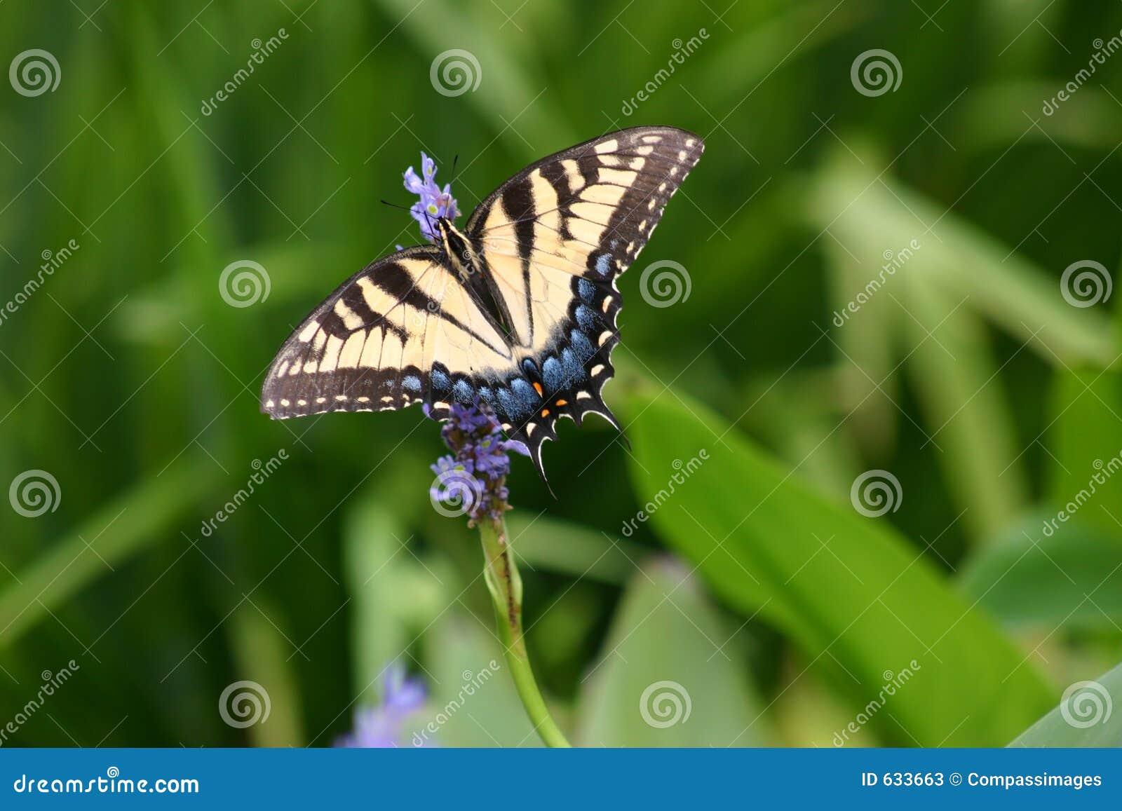 Download голубая бабочка стоковое изображение. изображение насчитывающей green - 633663