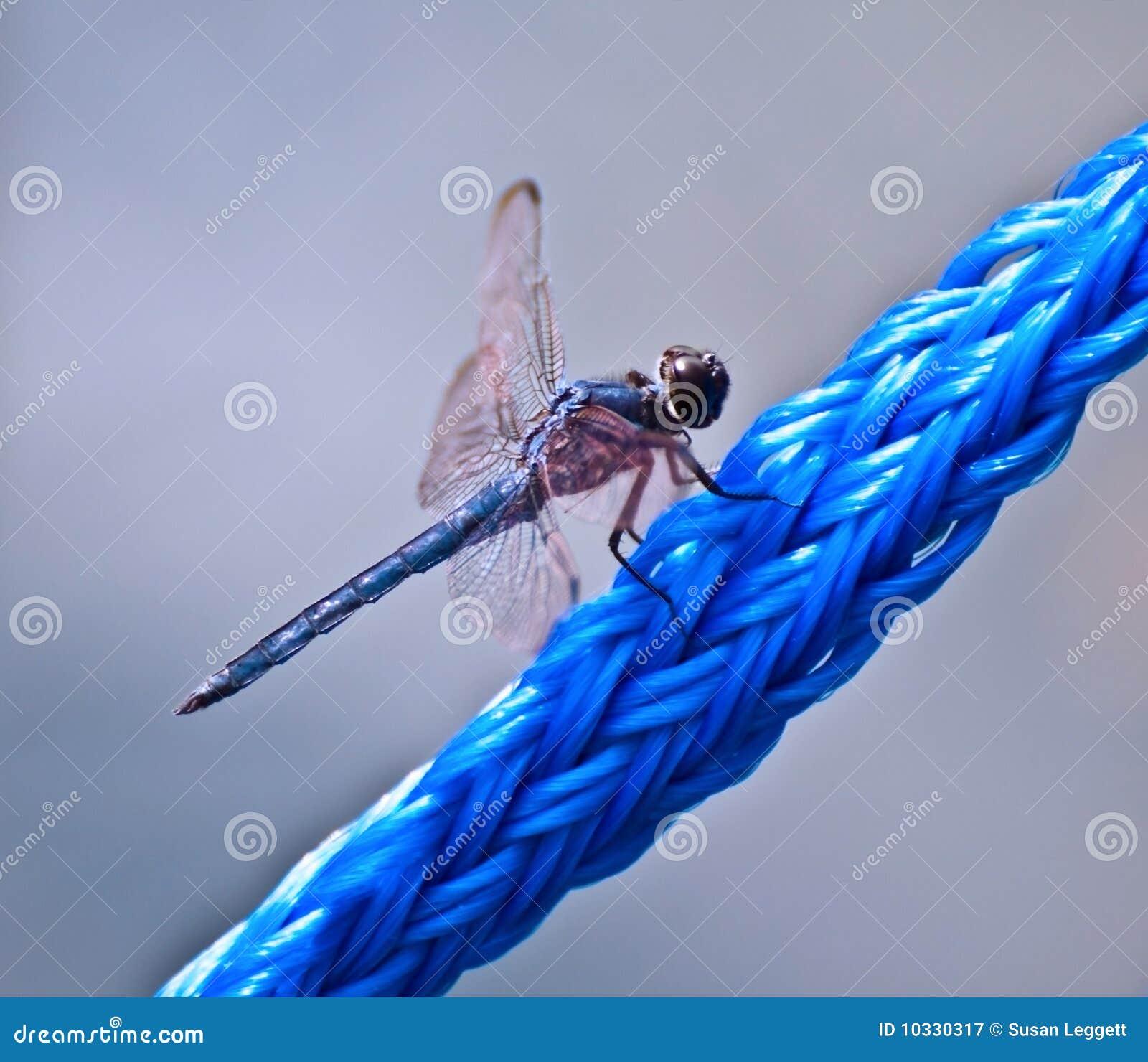 голубая веревочка dragonfly