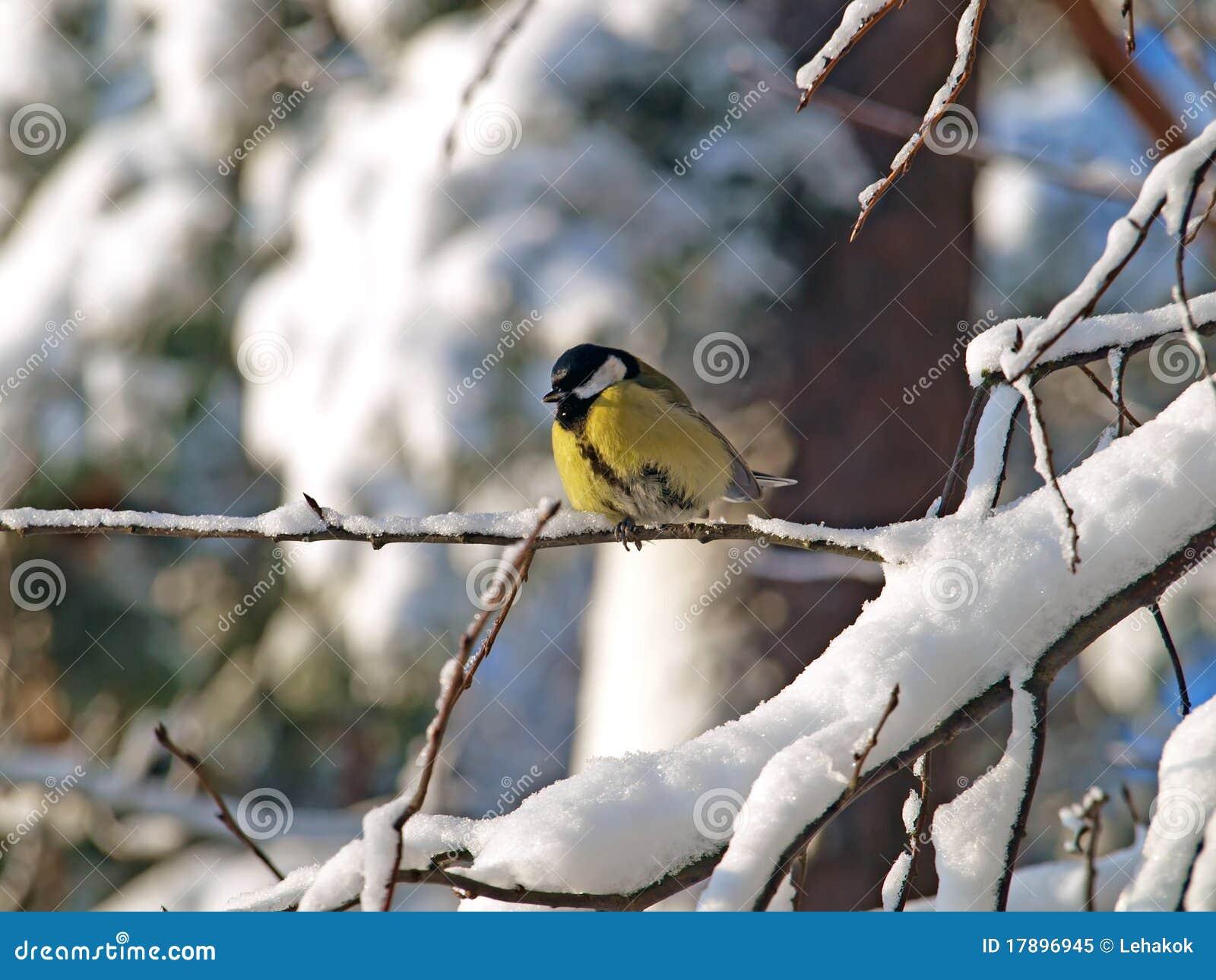 голубая зима tit сезона