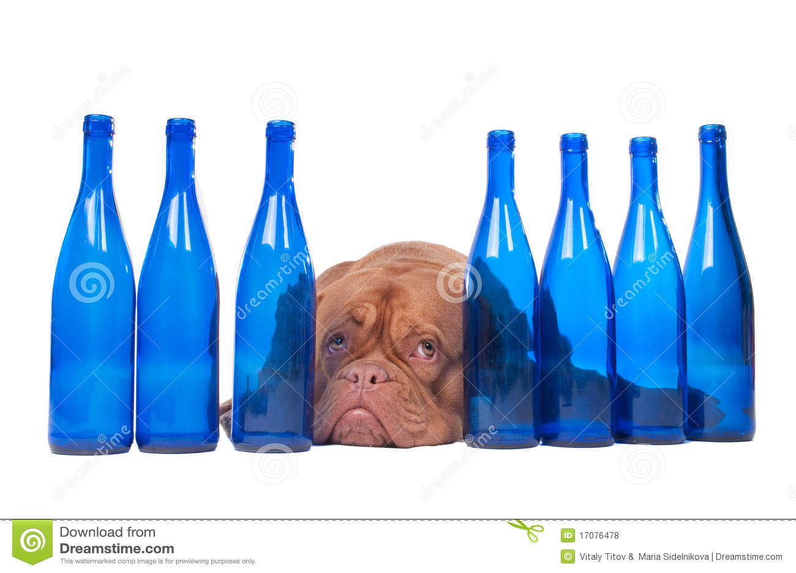 голубая собака бутылок