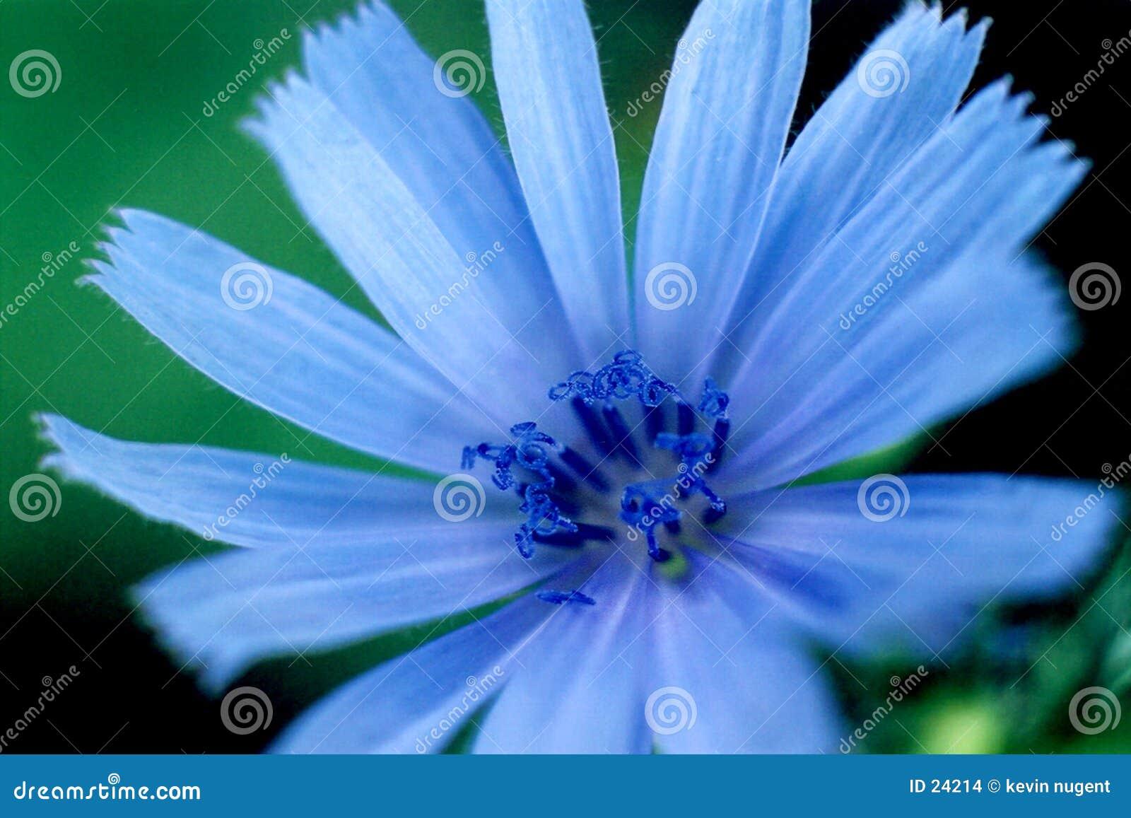голубая яркость