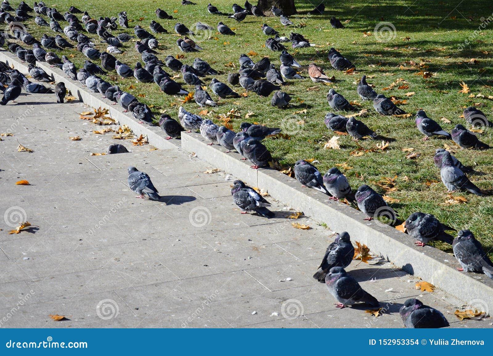 Голуби загорают в солнце