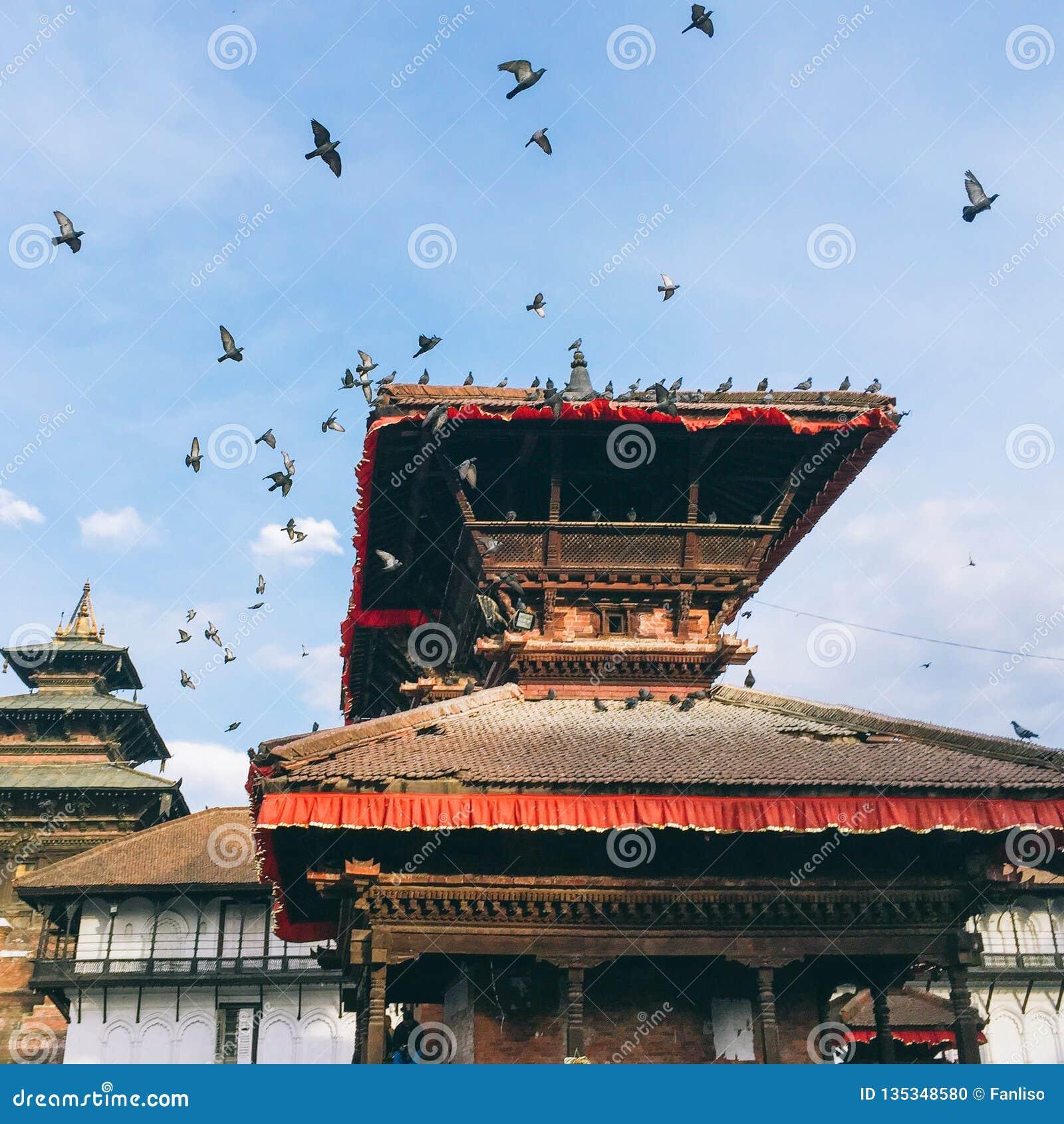 Голуби на квадрате Durbar Катманду, Непале
