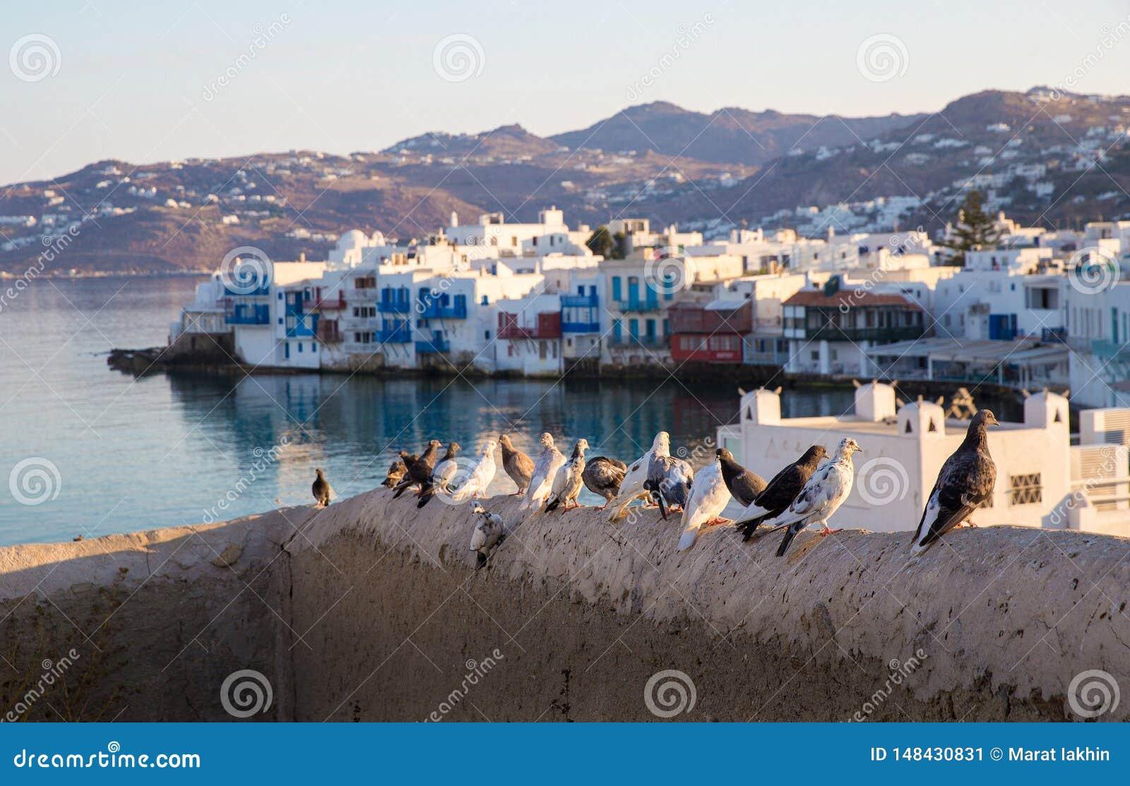 Голуби на острове Mykonos предпосылки греческом