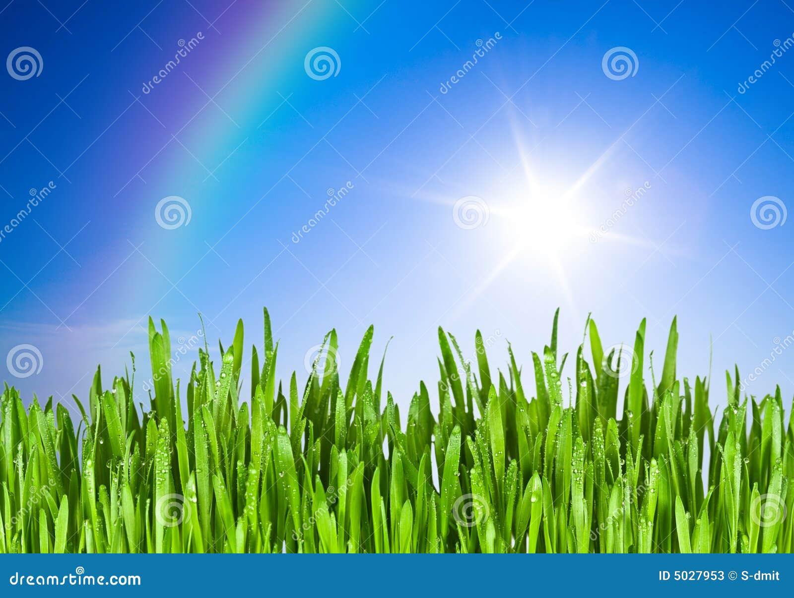 голубое небо зеленого цвета травы