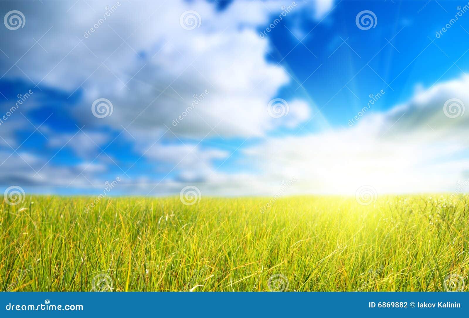 голубое небо травы поля