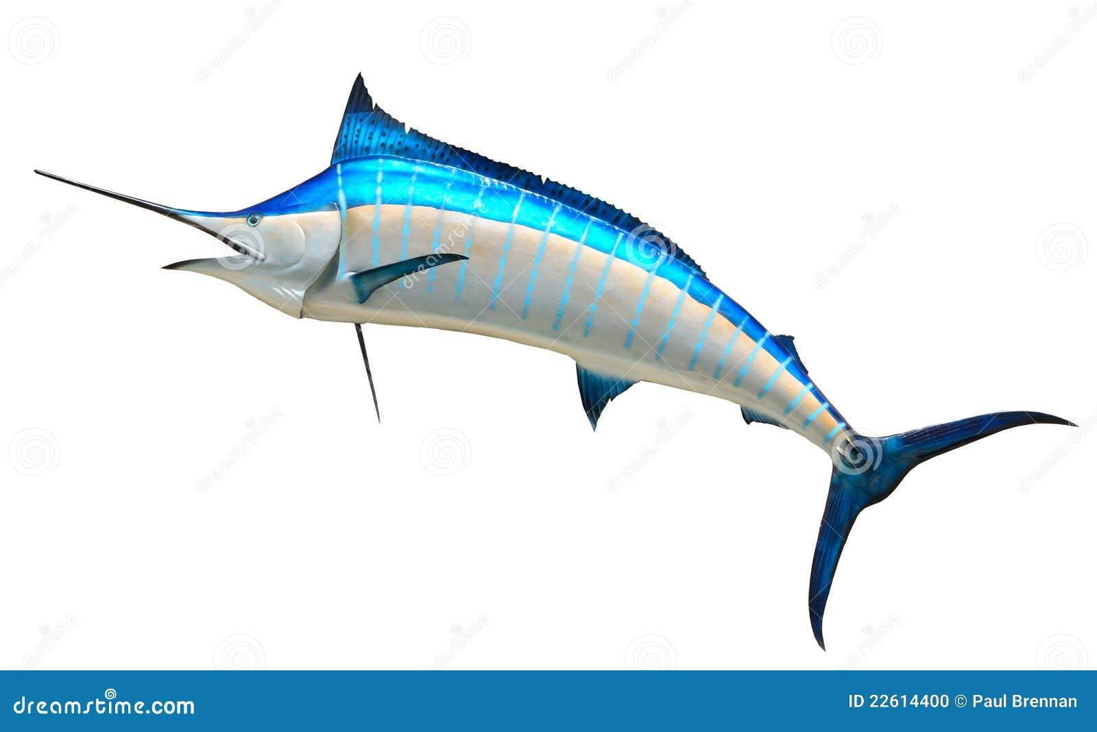 голубой Марлин рыб